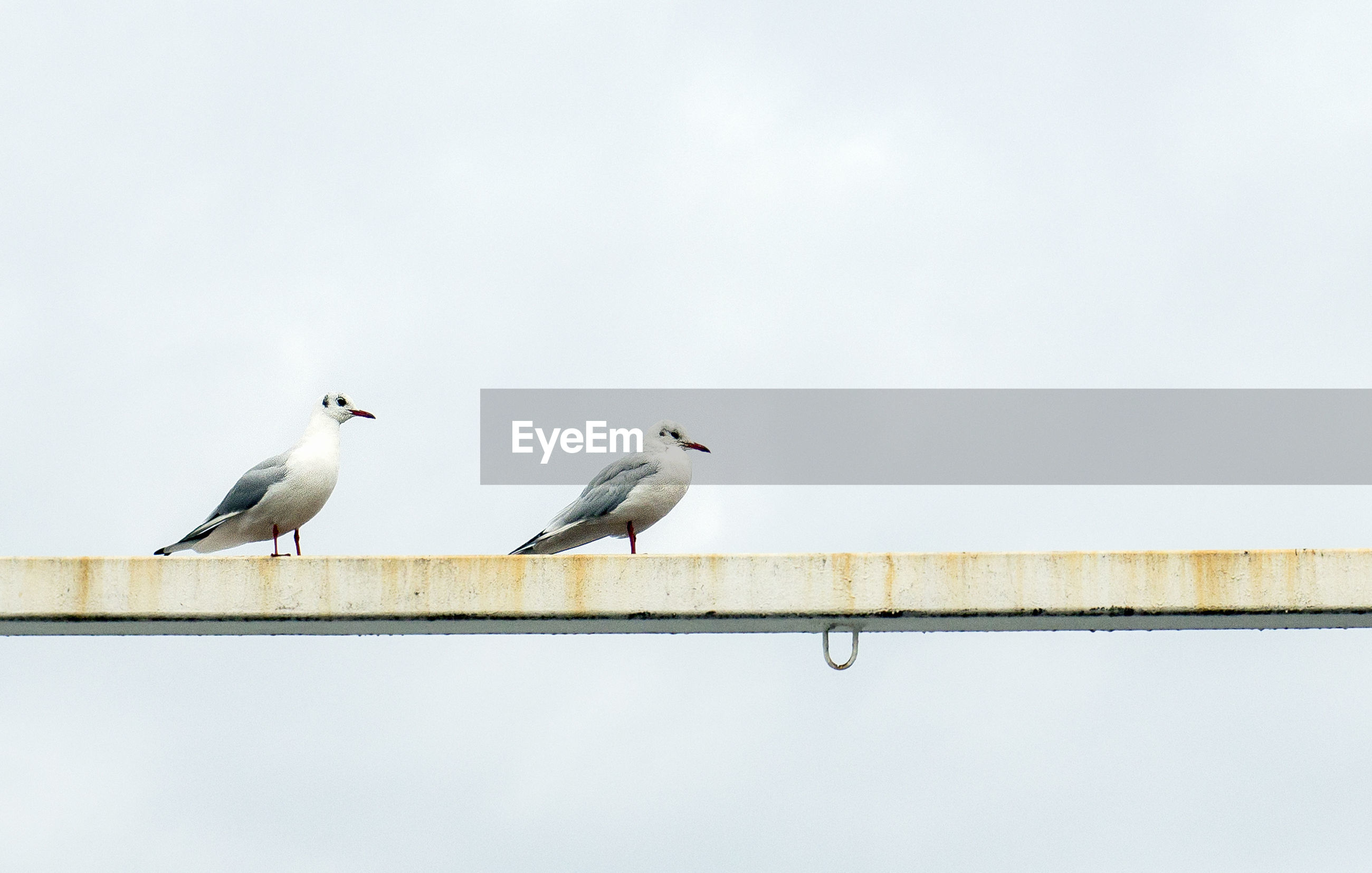 Low angle view of birds perched on railing