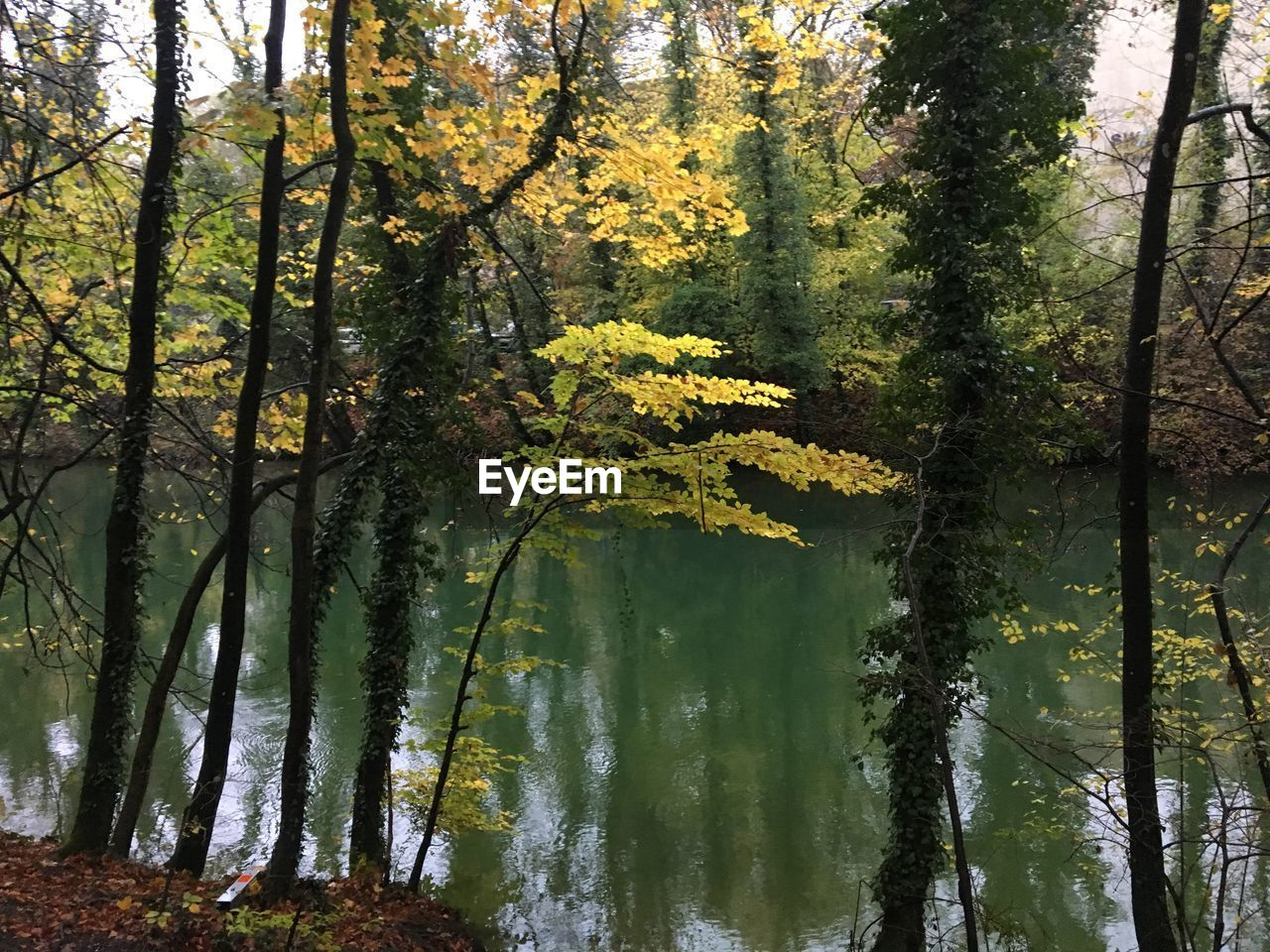 tree, plant, beauty in nature, forest, nature, tranquility, growth, water, lake, no people, land, tree trunk, trunk, reflection, outdoors, day, tranquil scene, branch, scenics - nature, woodland, change, leaves