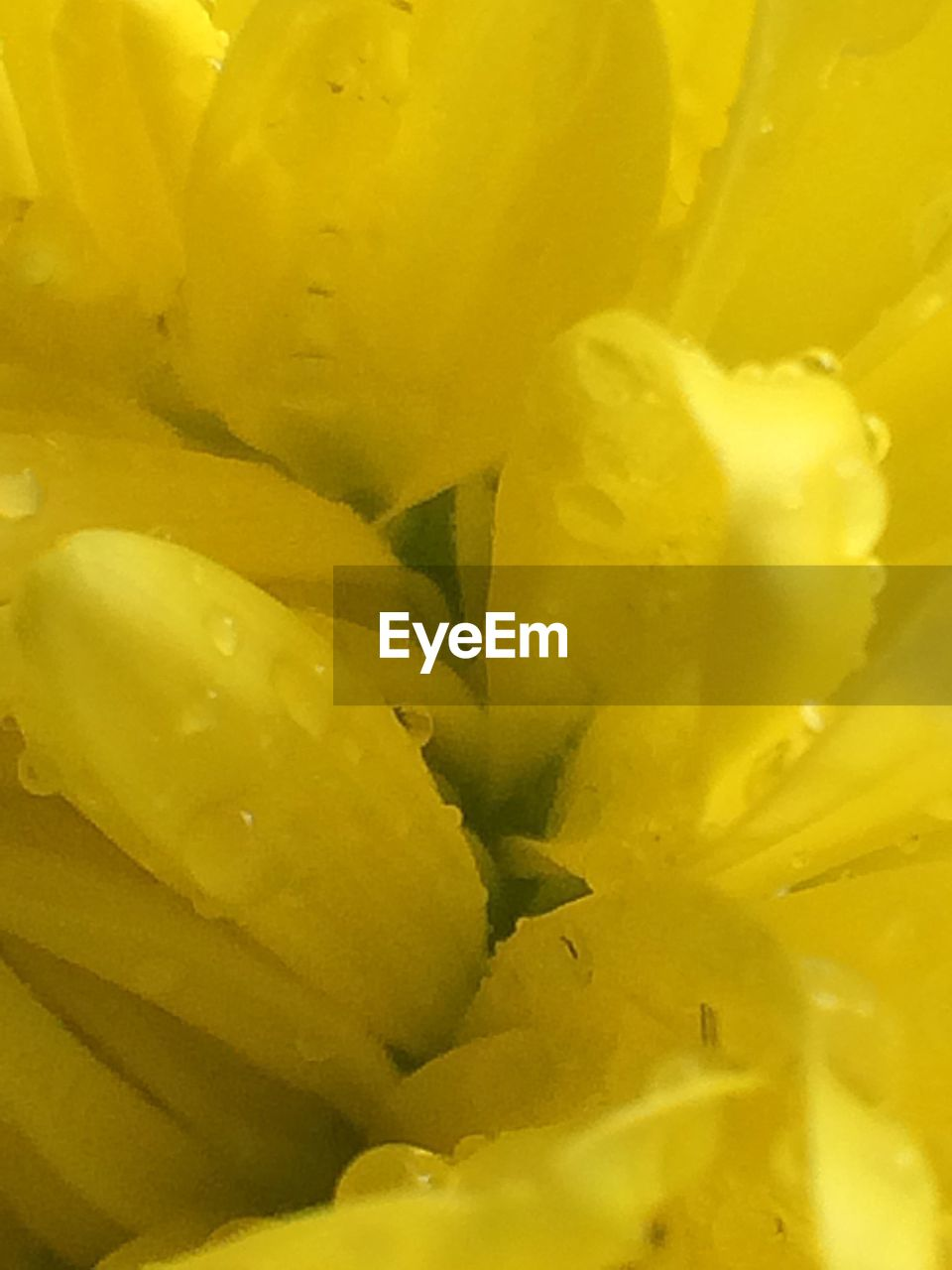 flower, full frame, backgrounds, freshness, yellow, petal, close-up, no people, food, nature, growth, fragility, plant, flower head, beauty in nature, day