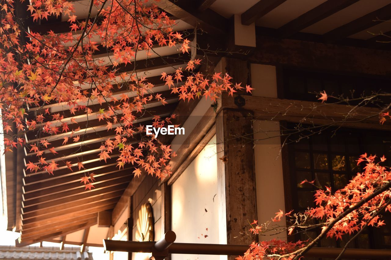 tree, flower, illuminated, architecture, ceiling, low angle view, built structure, flame, burning, night, branch, building exterior, nature, leaf, no people, indoors, beauty in nature