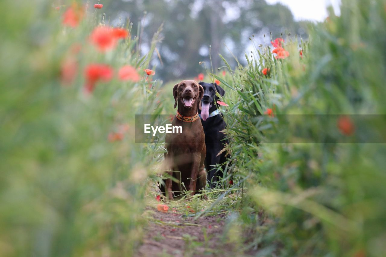 Portrait Of Dog On Plant