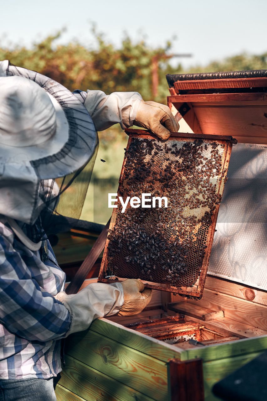 Bee keeper working while standing in park