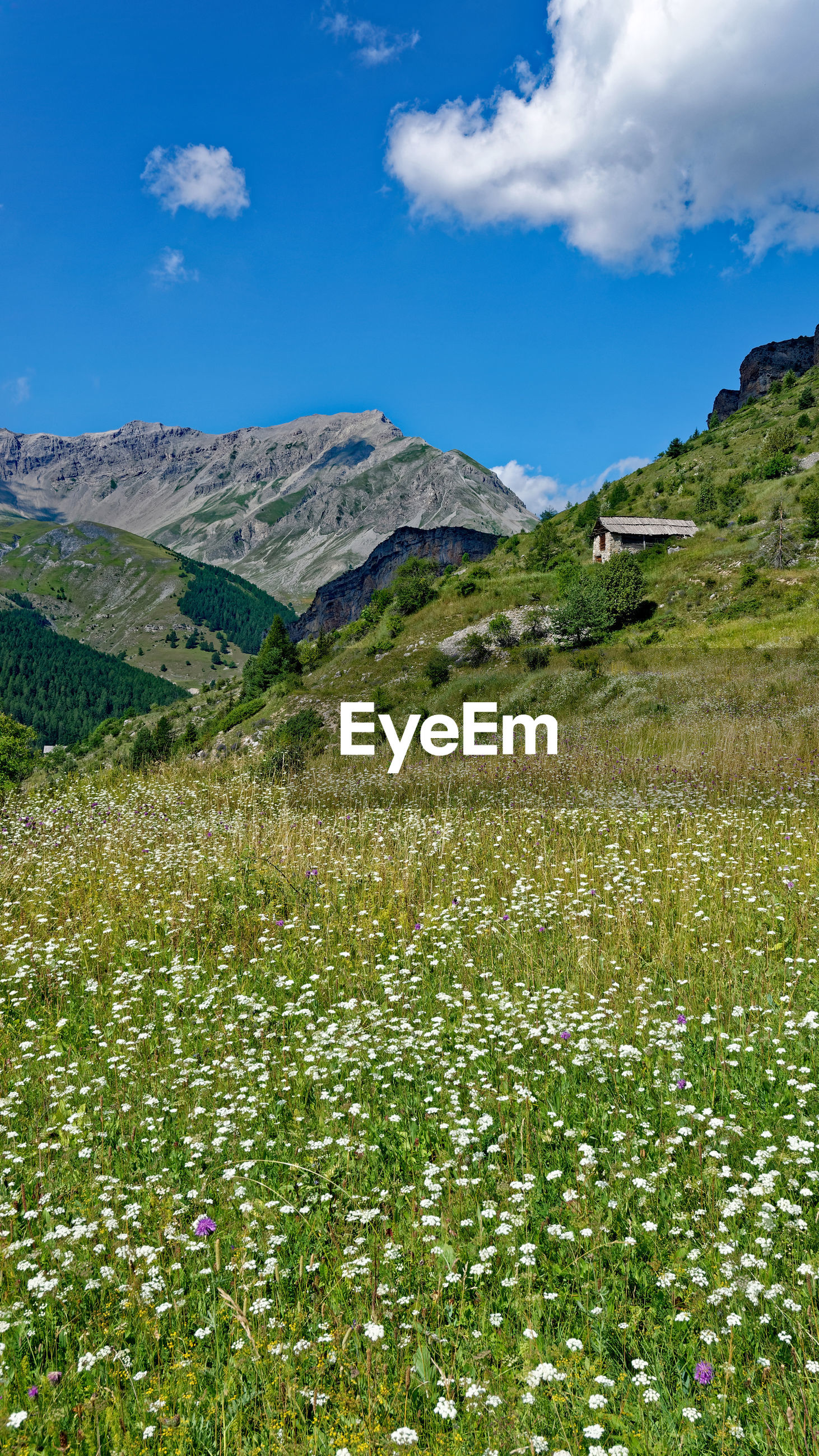 SCENIC VIEW OF GRASSY FIELD BY MOUNTAIN AGAINST SKY