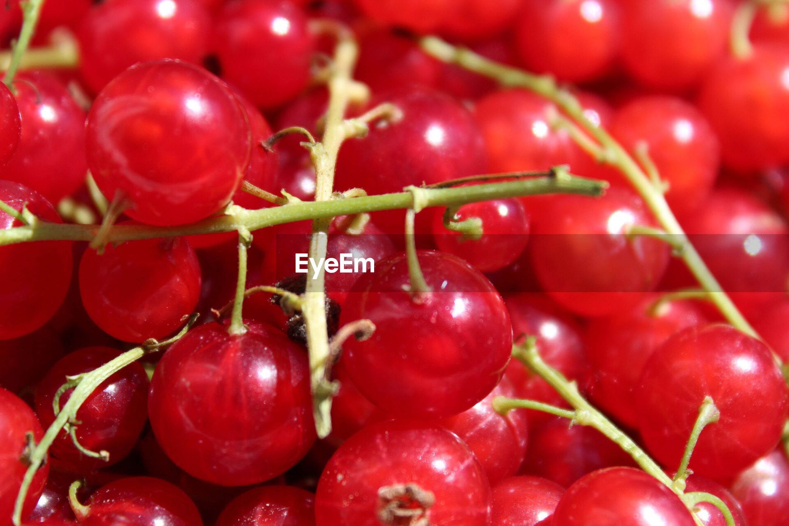 red, food and drink, fruit, food, cherry, full frame, close-up, backgrounds, healthy eating, no people, freshness, abundance, growth, outdoors, nature, day
