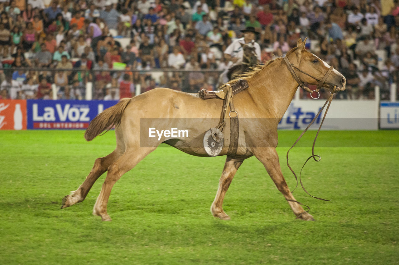mammal, domestic animals, sport, horse, animal themes, competition, running, horse racing, field, jockey, full length, one animal, side view, grass, day, competitive sport, outdoors, gambling, sports race, people