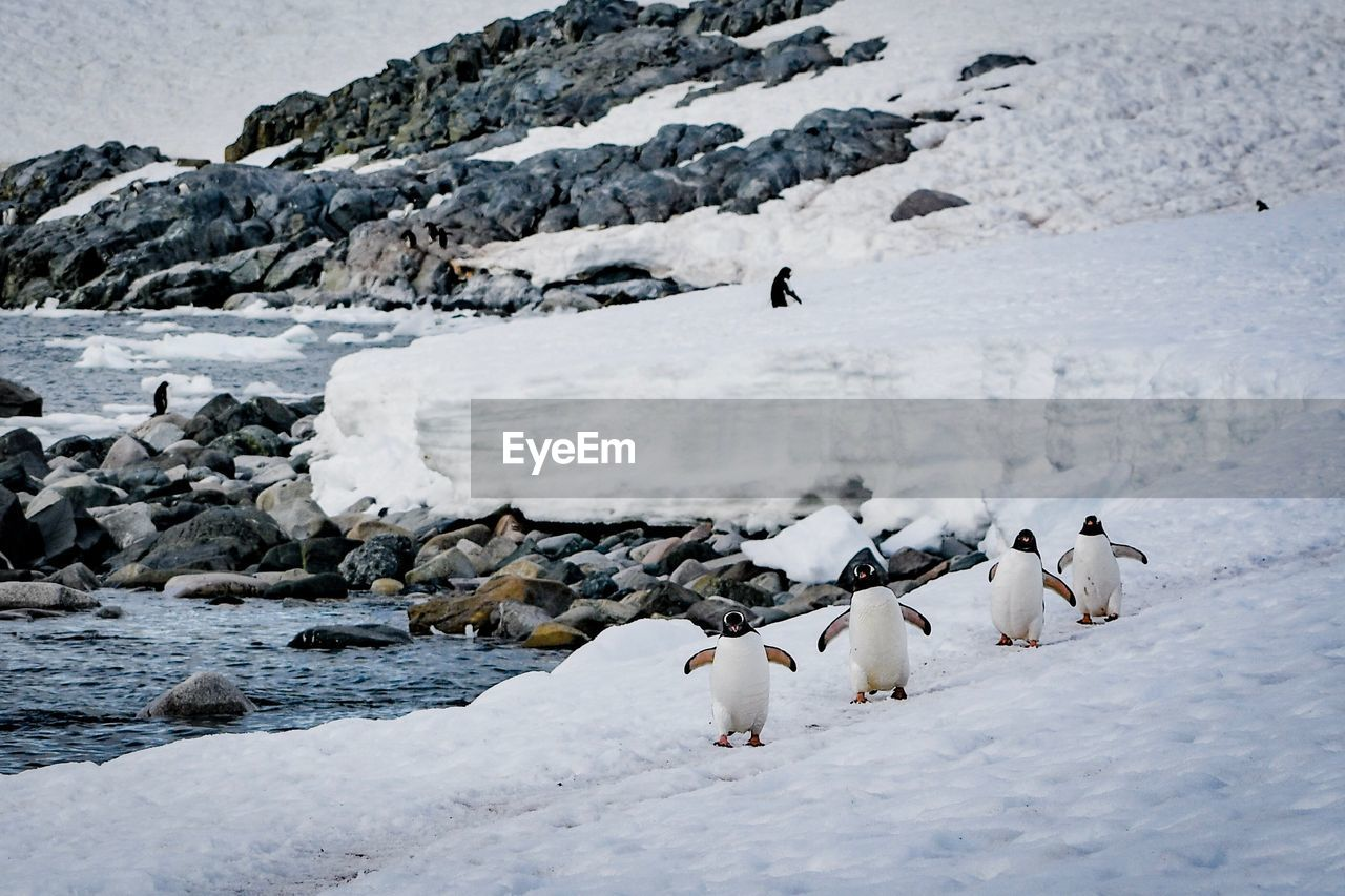 VIEW OF BIRDS IN SNOW