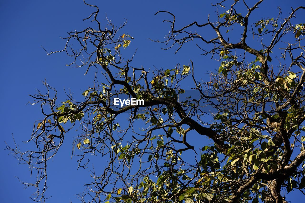 tree, plant, sky, low angle view, branch, blue, clear sky, no people, beauty in nature, nature, day, tranquility, outdoors, growth, sunlight, plant part, leaf, bird, bare tree, vertebrate, tree canopy