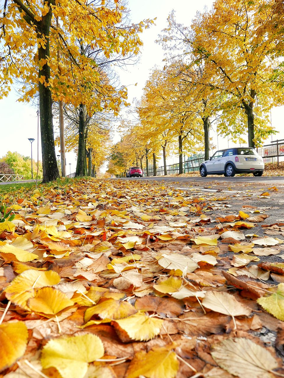 leaf, change, autumn, tree, fallen, nature, leaves, dry, yellow, beauty in nature, land vehicle, transportation, day, the way forward, car, outdoors, tranquility, scenics, mode of transport, no people, park - man made space, branch, tree trunk, maple, fragility, close-up