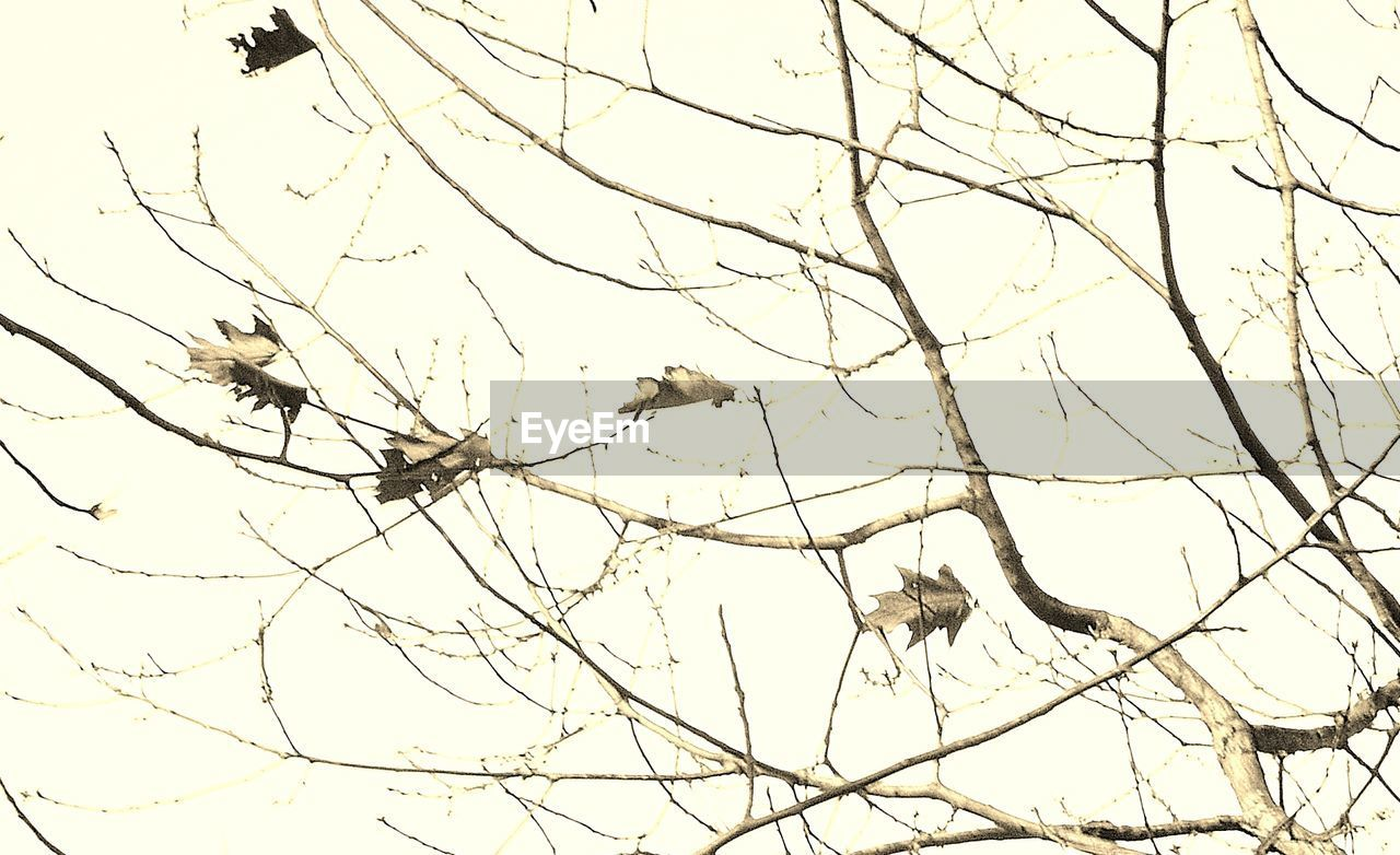 branch, bird, animals in the wild, animal themes, bare tree, nature, low angle view, animal wildlife, tree, perching, no people, bird of prey, one animal, outdoors, clear sky, day, beauty in nature, sky, spread wings, cockatoo, mammal