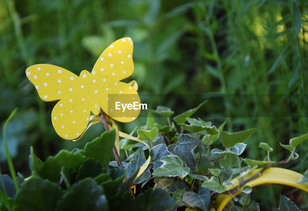 polka dot, spotted, leaf, growth, nature, outdoors, close-up, no people, plant, day, freshness, beauty in nature, fragility, flower head