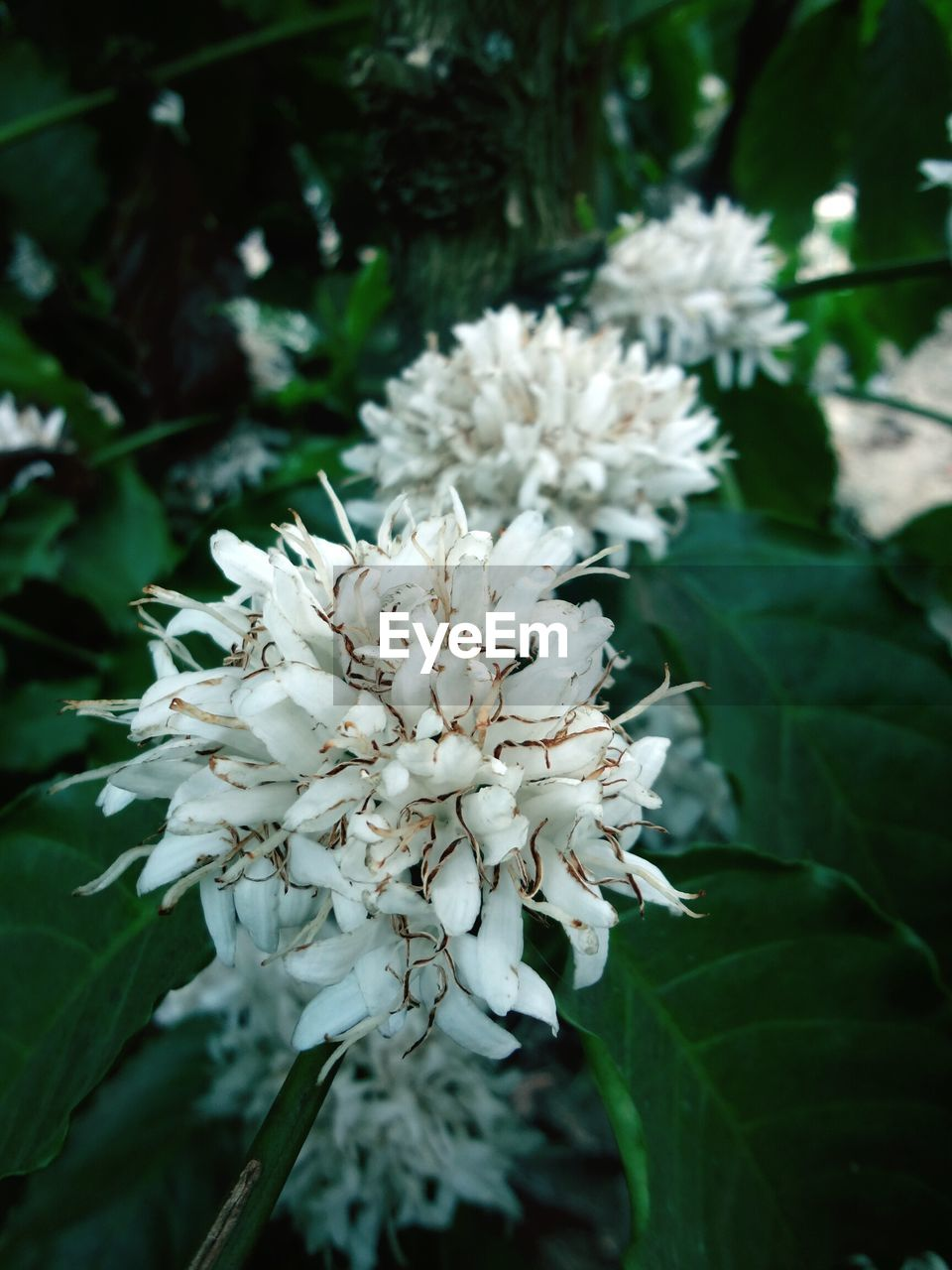 flower, white color, nature, beauty in nature, blossom, growth, fragility, no people, petal, freshness, flower head, tree, plant, outdoors, day, blooming, close-up