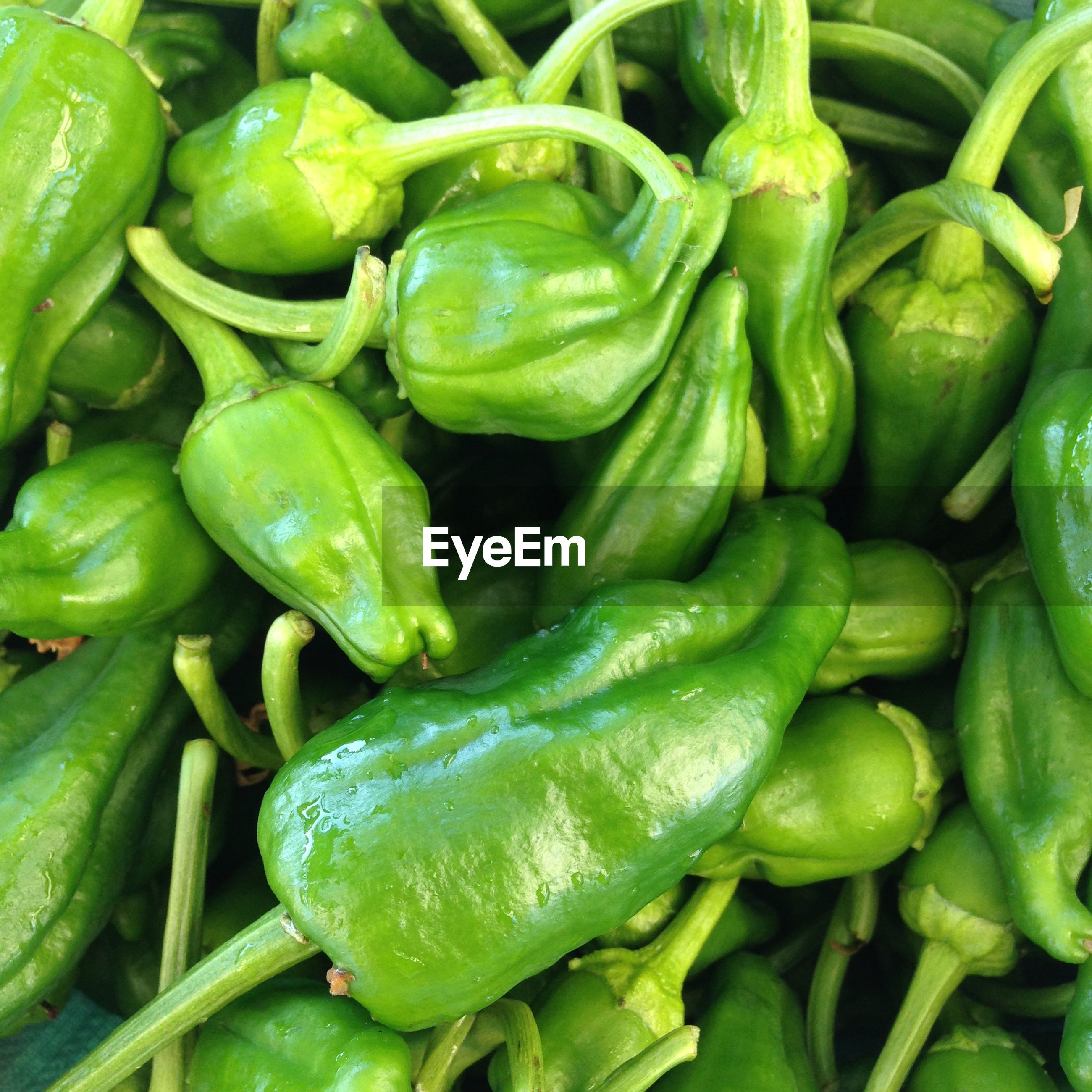 Detail shot of green chilies