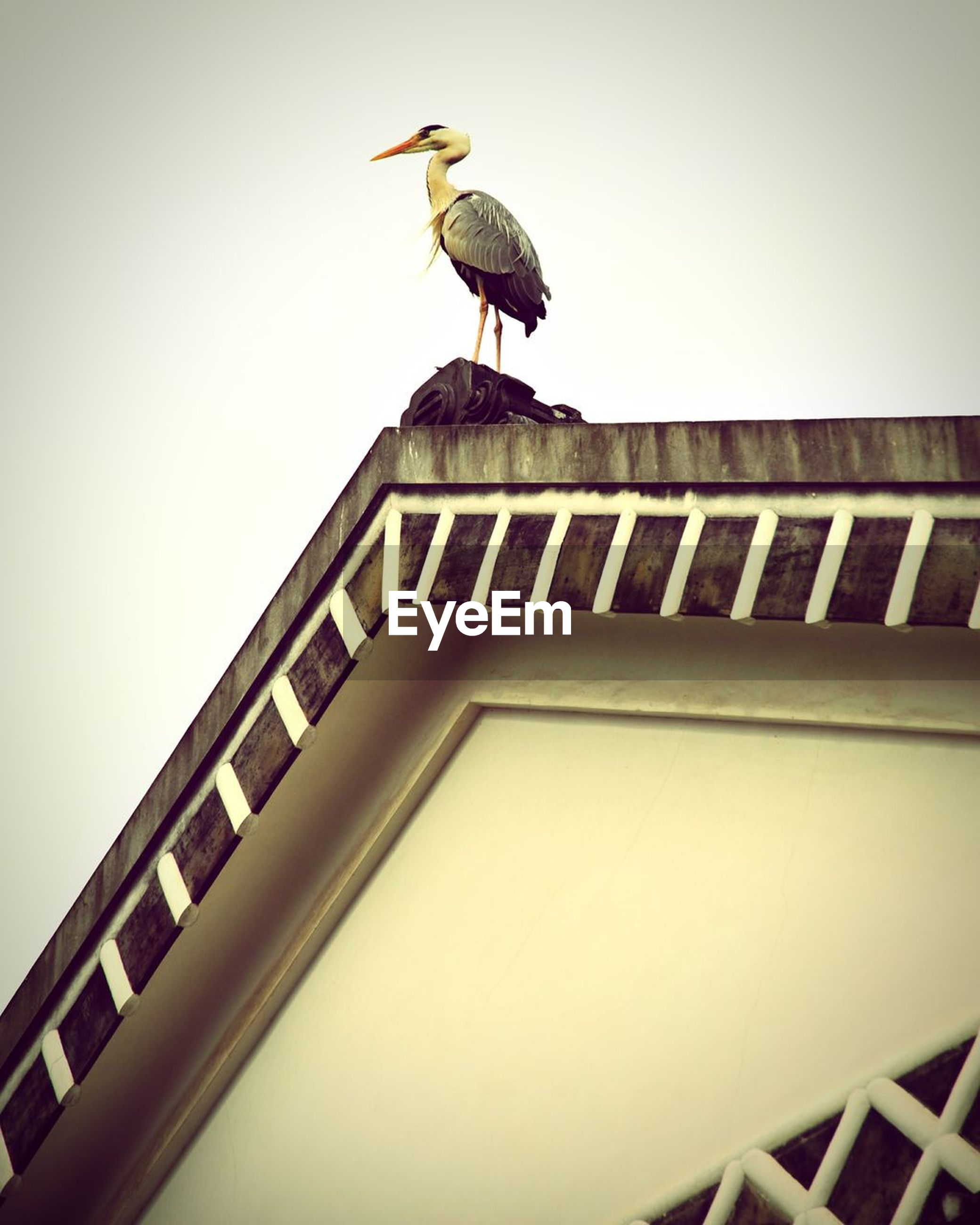 bird, animal themes, animals in the wild, wildlife, one animal, low angle view, architecture, building exterior, flying, built structure, perching, clear sky, spread wings, pigeon, seagull, two animals, copy space, day, outdoors, no people