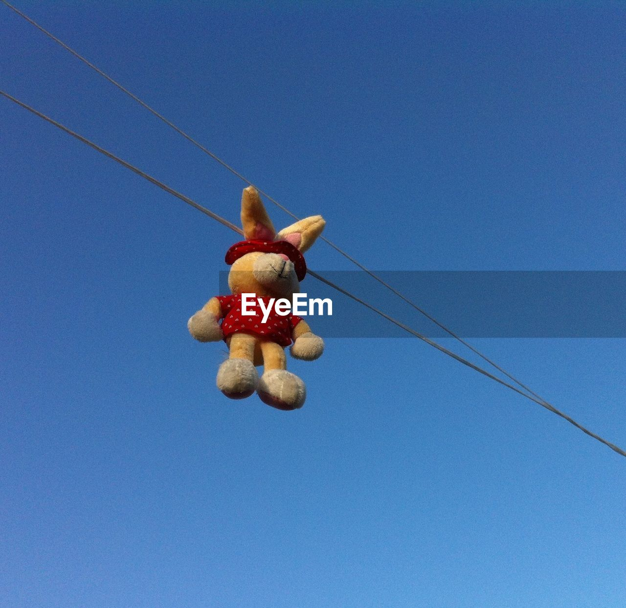 Toy Rabbit Hanging On Power Cable