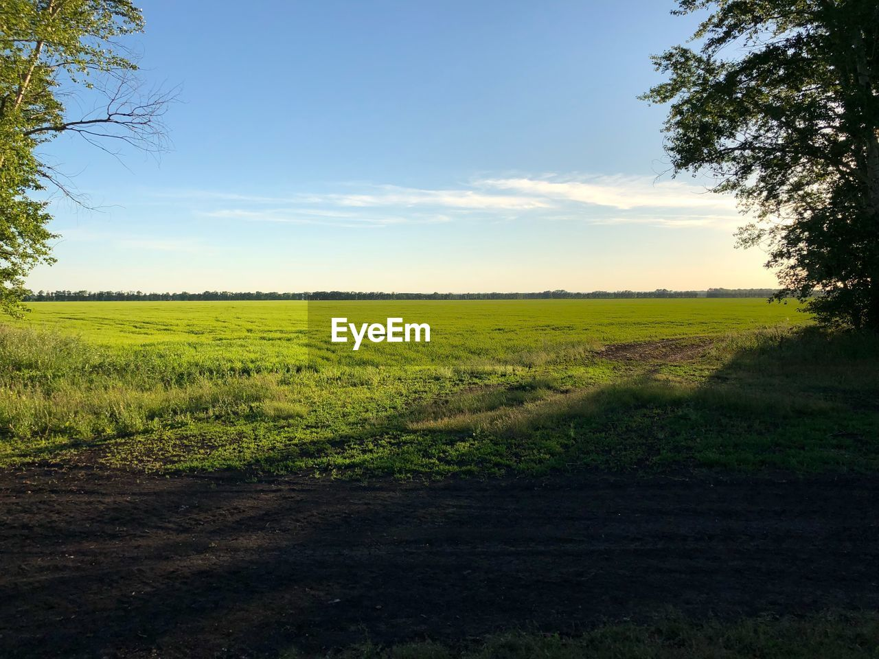 landscape, environment, field, tranquil scene, land, tranquility, sky, scenics - nature, grass, nature, rural scene, beauty in nature, plant, no people, horizon over land, agriculture, horizon, growth, day, non-urban scene, outdoors