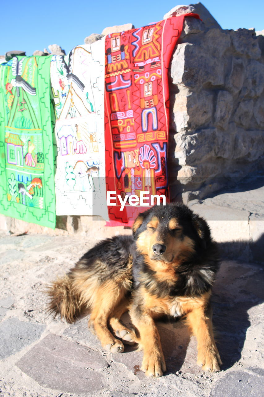 mammal, one animal, domestic animals, pets, dog, canine, domestic, vertebrate, sunlight, day, no people, nature, outdoors, young animal, relaxation, architecture