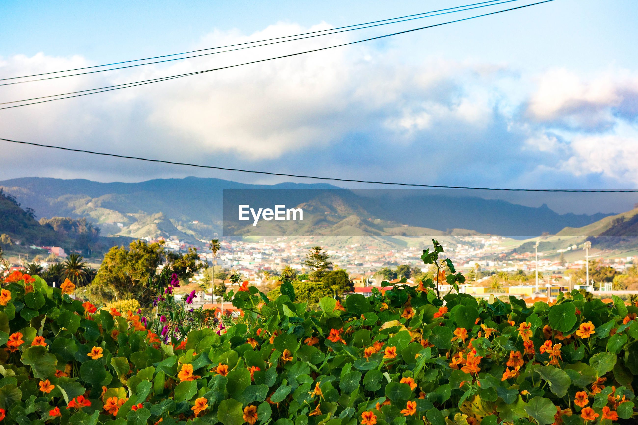 SCENIC VIEW OF FLOWERS IN FRONT OF MOUNTAINS AGAINST SKY