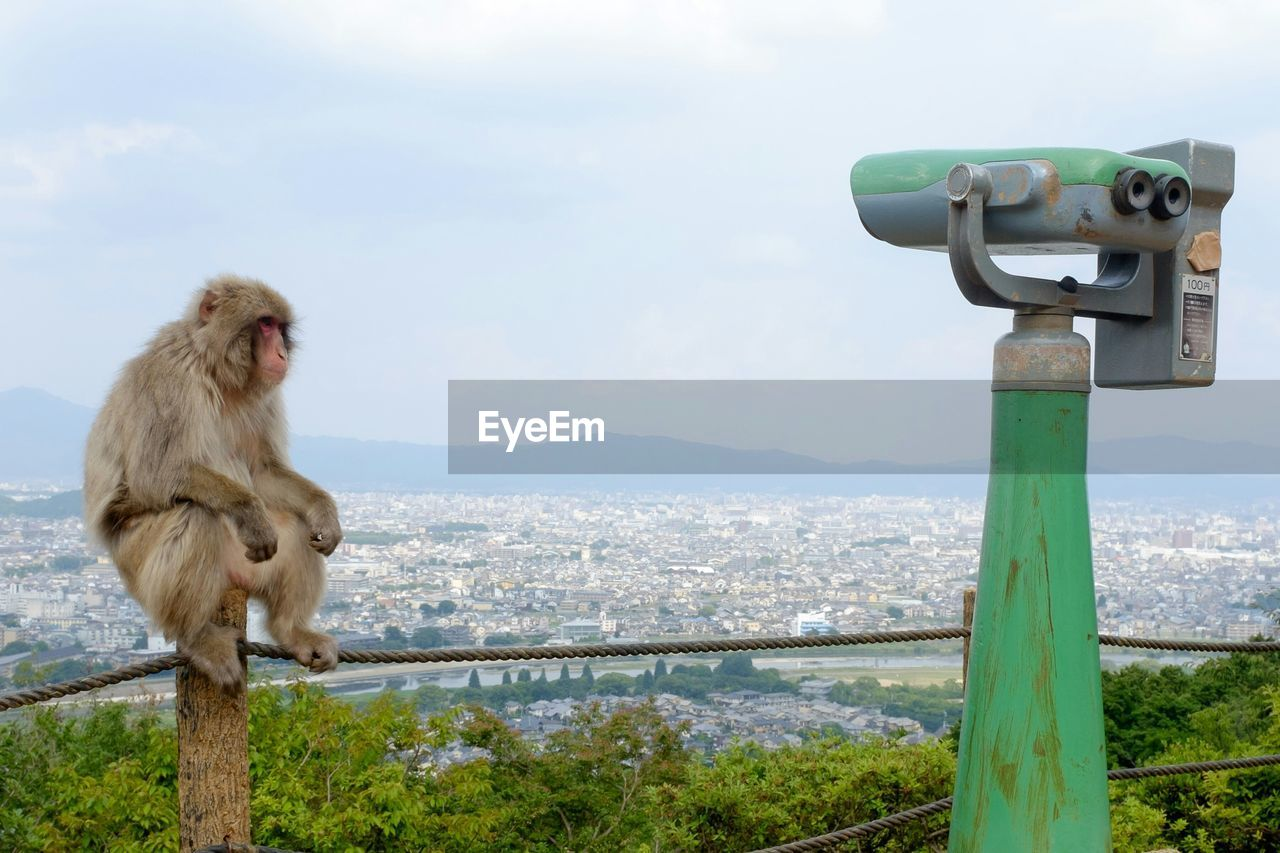 Monkey relaxing on railing by cityscape against sky