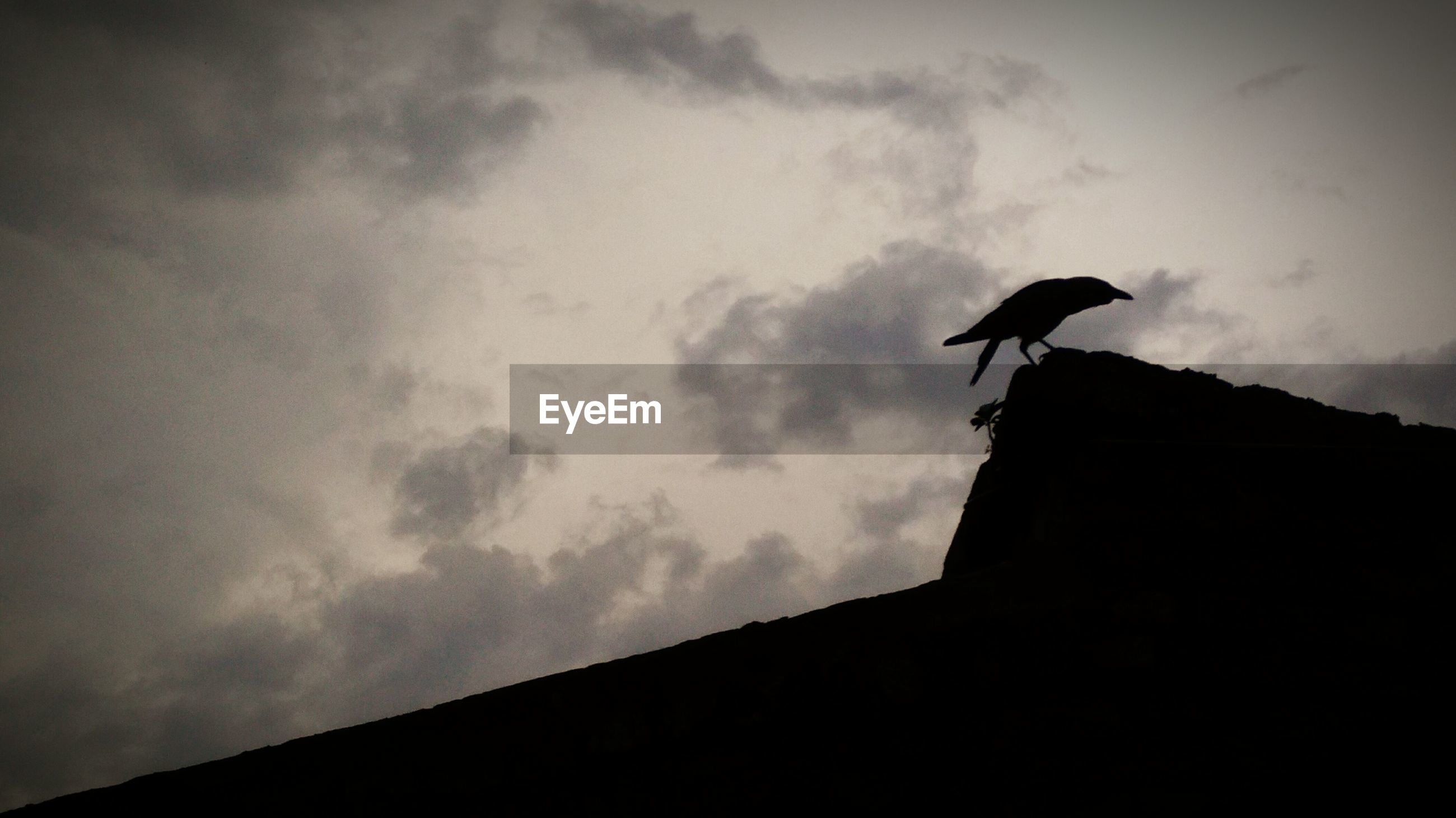Low angle view of silhouette bird on house roof
