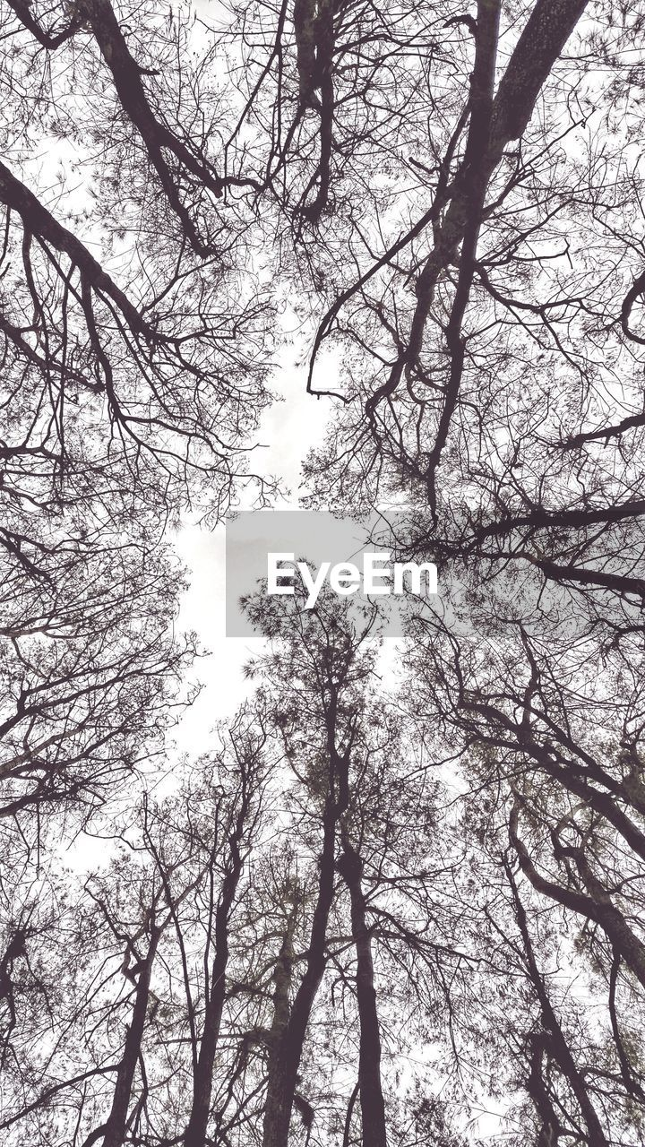 tree, branch, low angle view, nature, forest, beauty in nature, tranquility, no people, growth, tranquil scene, tree trunk, outdoors, day, scenics, sky, bare tree