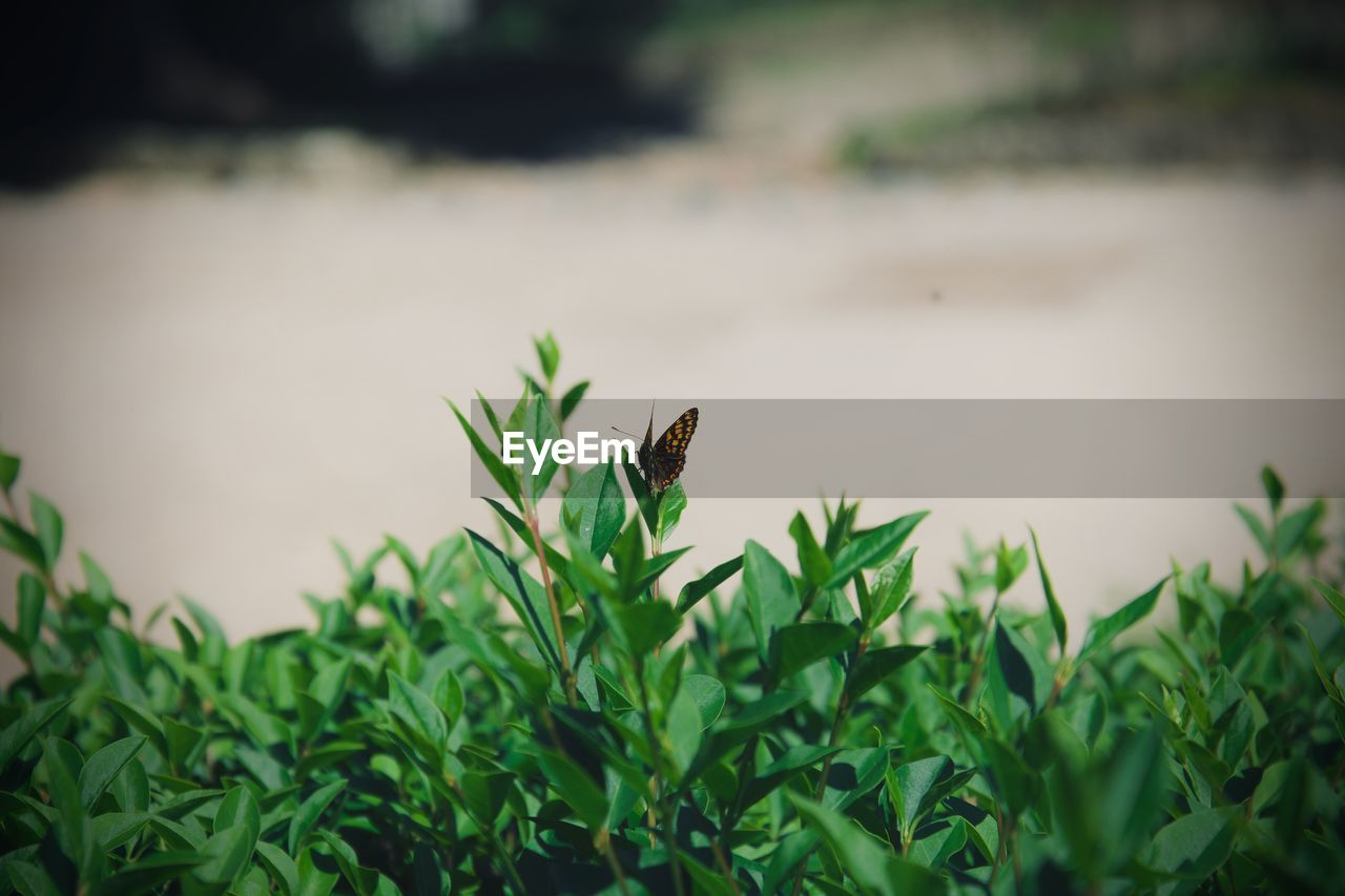 animal themes, one animal, animal, animal wildlife, animals in the wild, plant, green color, growth, vertebrate, nature, day, bird, no people, invertebrate, leaf, plant part, insect, selective focus, beauty in nature, outdoors