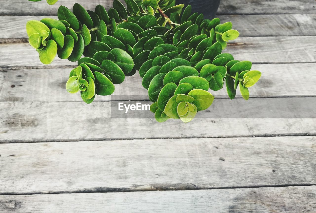HIGH ANGLE VIEW OF VEGETABLES ON TABLE AGAINST WALL