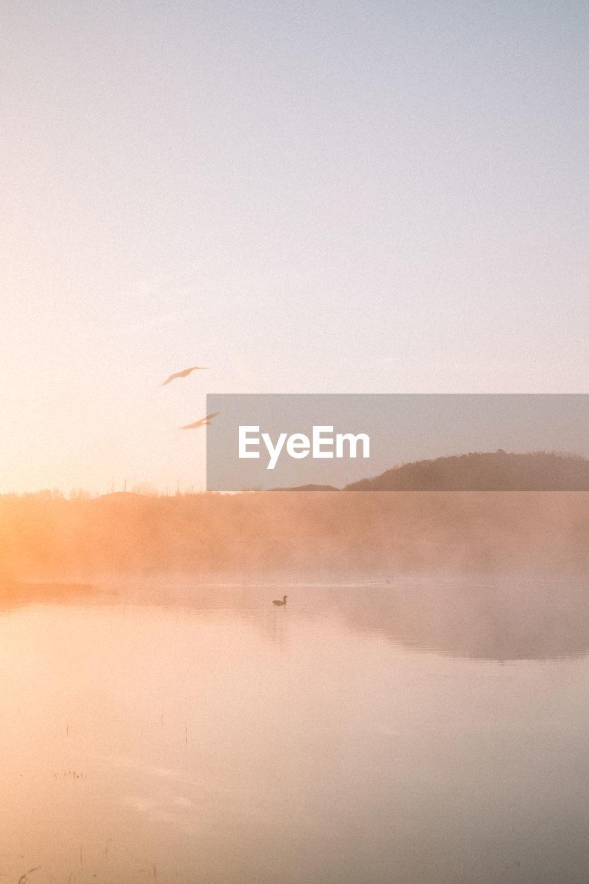 Bird flying over lake against sky during sunset