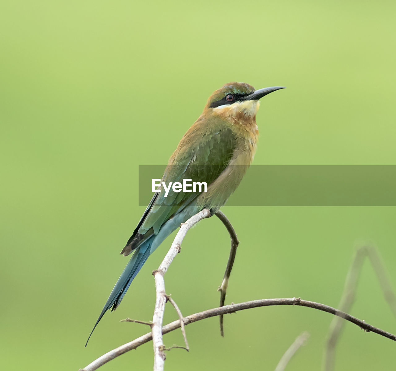 one animal, bird, animals in the wild, animal themes, animal wildlife, perching, twig, no people, green color, kingfisher, day, focus on foreground, nature, outdoors, branch, close-up, beauty in nature