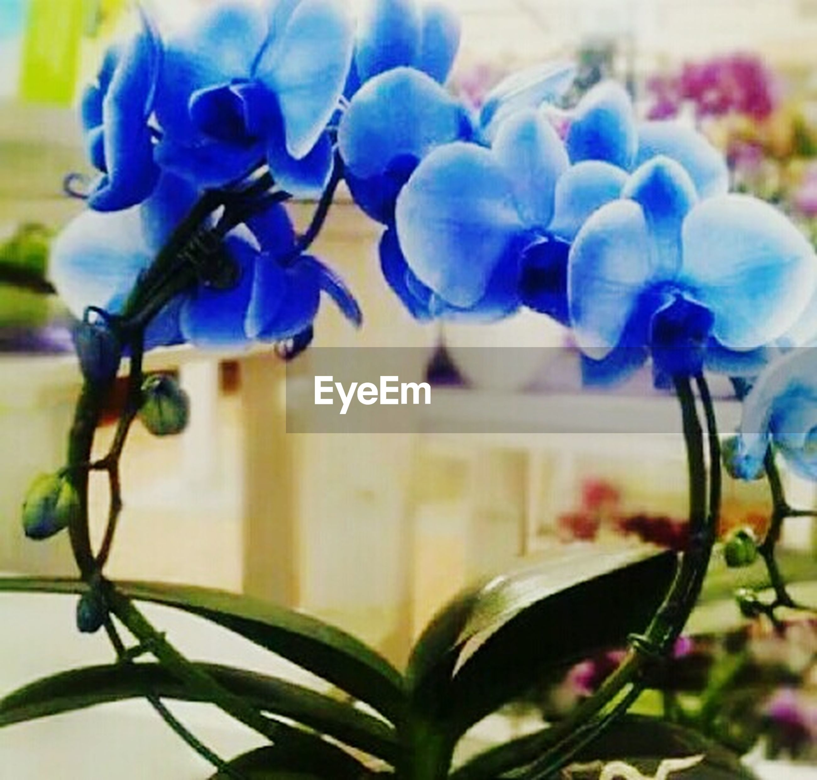 flower, plant, freshness, fragility, growth, focus on foreground, petal, close-up, flower head, purple, beauty in nature, nature, blooming, stem, blue, leaf, selective focus, bud, day, outdoors