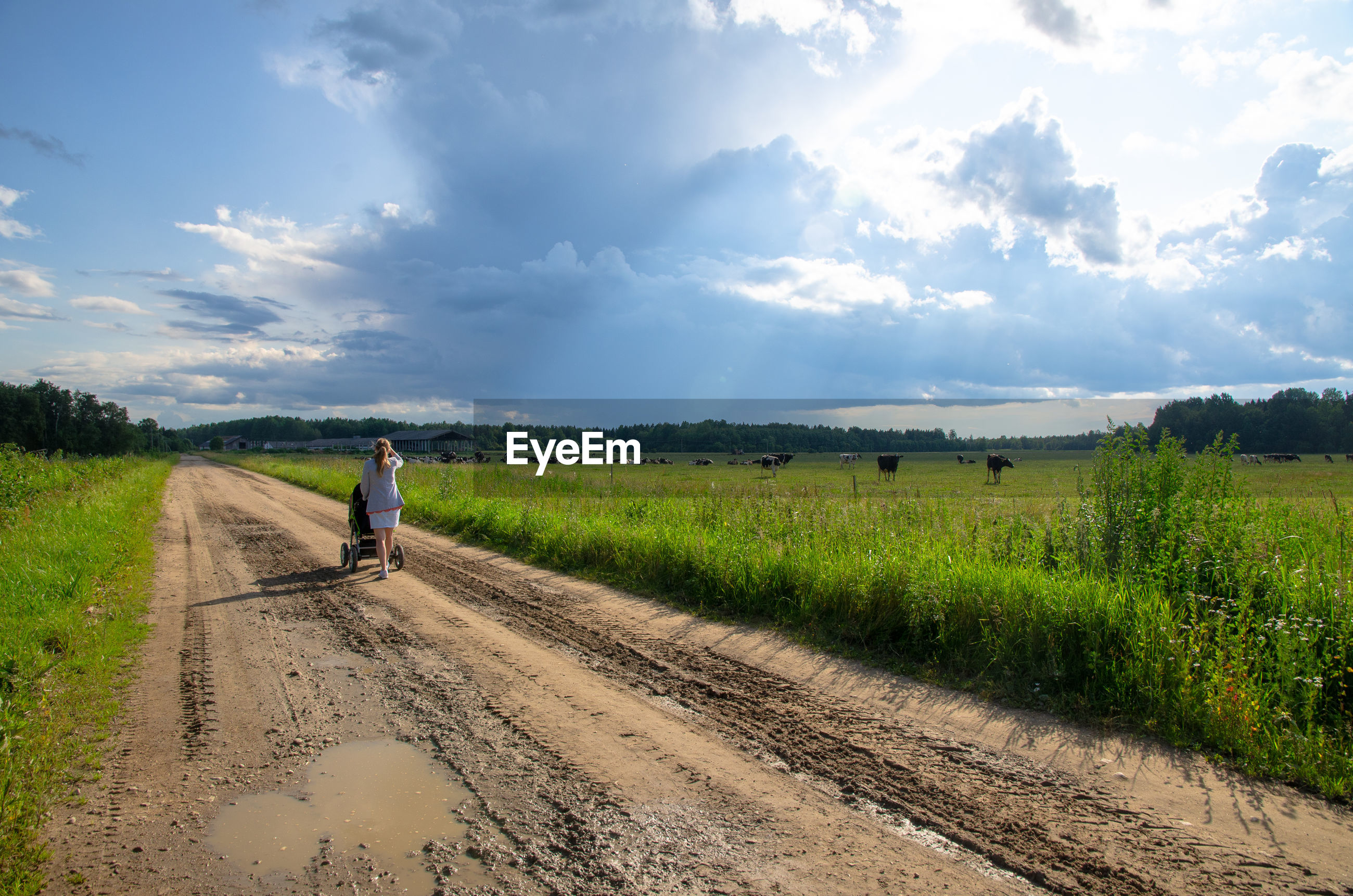 Rear view of woman with baby carriage on dirt road amidst field against sky