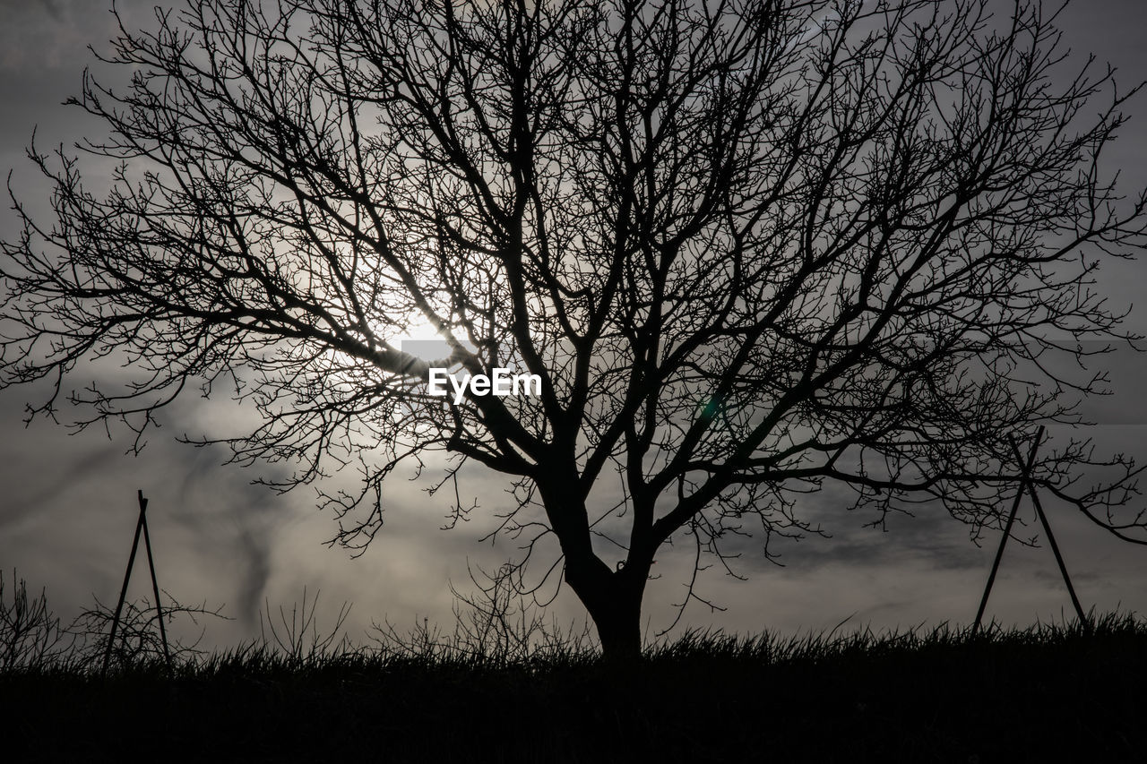 tree, sky, bare tree, plant, tranquility, silhouette, beauty in nature, land, field, tranquil scene, nature, branch, scenics - nature, non-urban scene, environment, no people, cloud - sky, landscape, outdoors, dusk