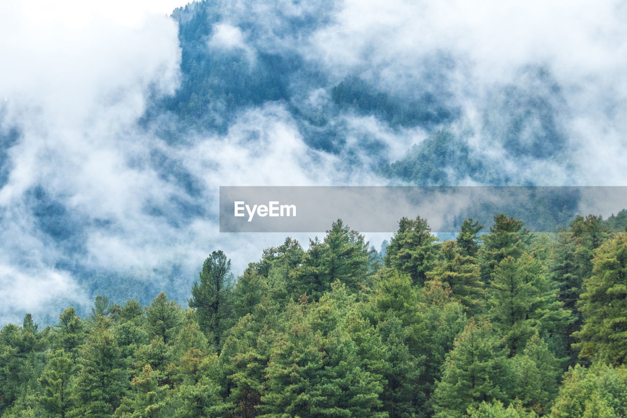 plant, tree, cloud - sky, growth, sky, green color, beauty in nature, tranquility, day, nature, tranquil scene, no people, forest, scenics - nature, non-urban scene, land, outdoors, environment, low angle view, green, evergreen tree, pine tree, coniferous tree, turquoise colored, pine woodland