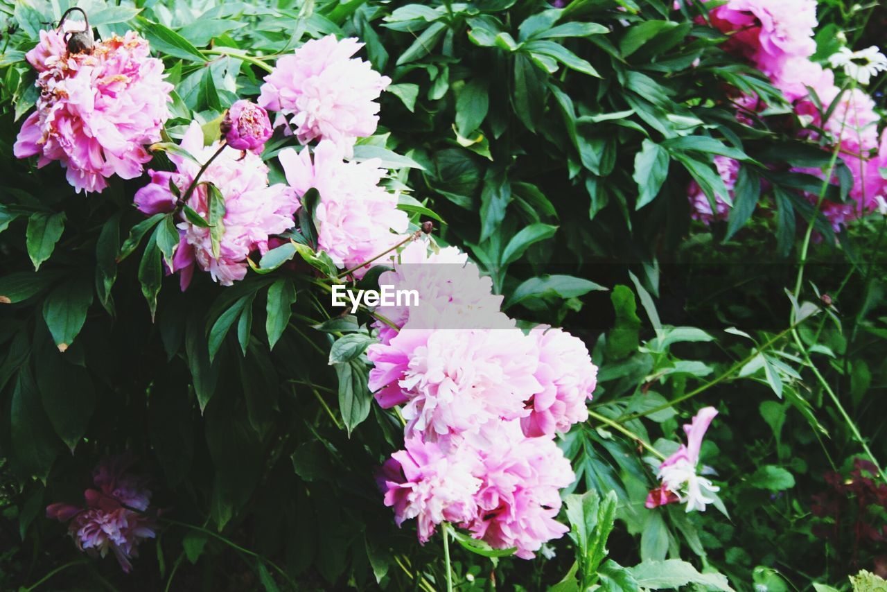 flower, growth, nature, pink color, beauty in nature, no people, freshness, outdoors, fragility, day