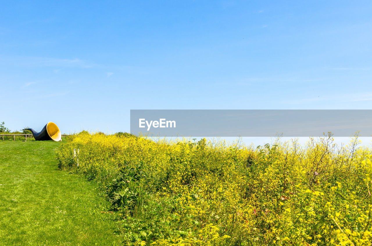 plant, sky, field, yellow, beauty in nature, land, green color, growth, nature, tranquil scene, landscape, flower, no people, tranquility, flowering plant, scenics - nature, grass, day, environment, balloon, outdoors