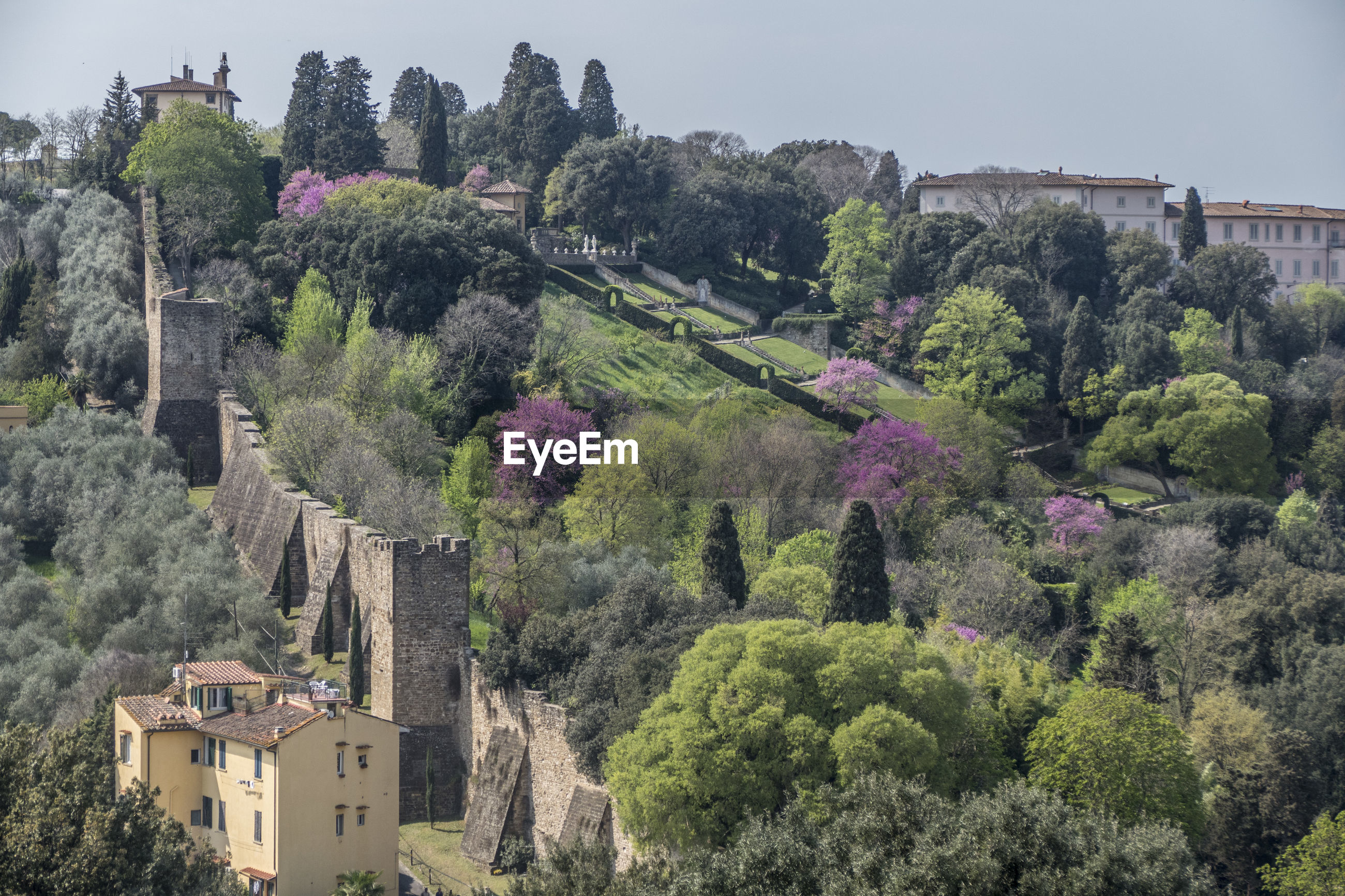 PANORAMIC VIEW OF TREES AND BUILDINGS