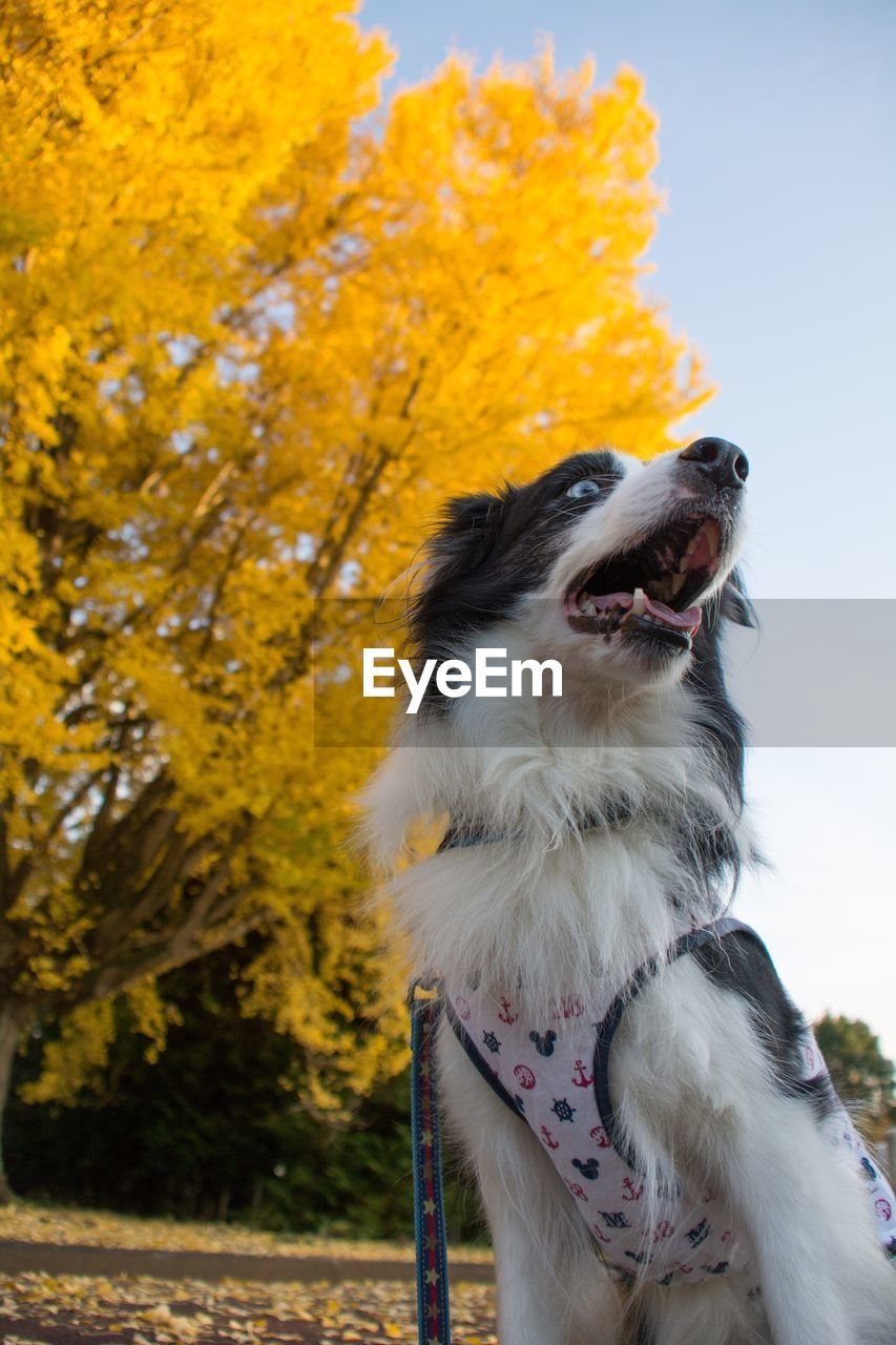 one animal, animal themes, animal, mammal, pets, domestic, domestic animals, canine, dog, vertebrate, looking, nature, no people, looking away, focus on foreground, day, tree, plant, outdoors, facial expression, mouth open, change, purebred dog