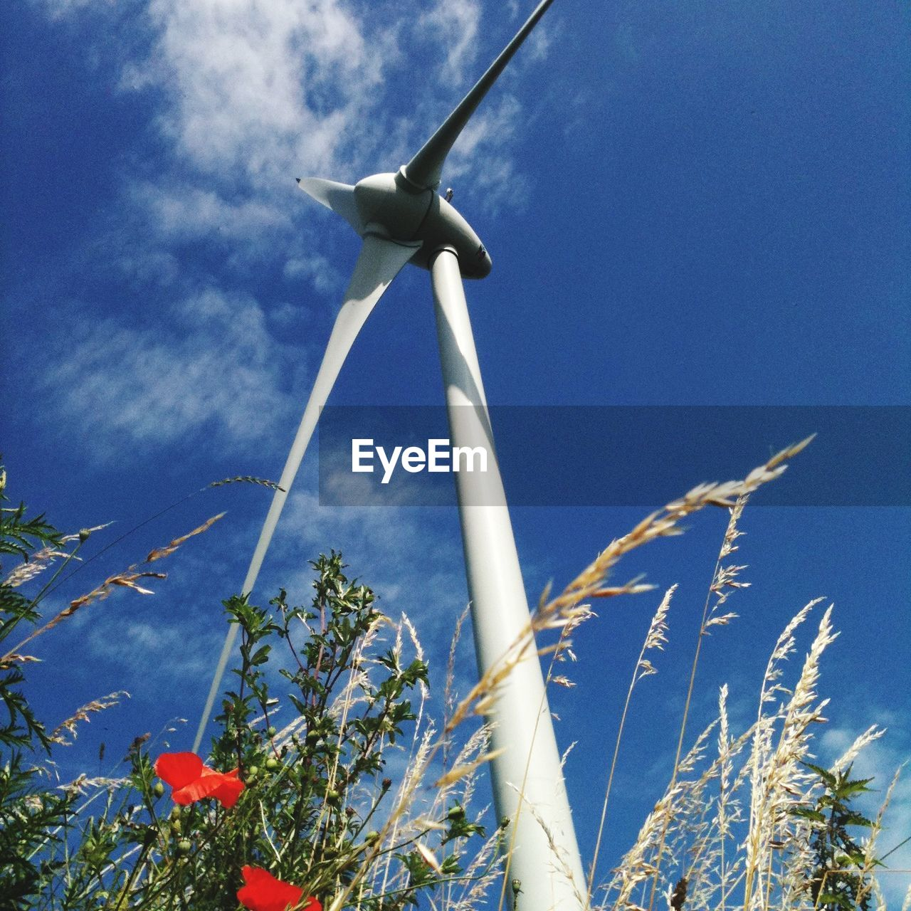 renewable energy, wind turbine, alternative energy, wind power, turbine, environmental conservation, plant, low angle view, fuel and power generation, sky, environment, nature, day, blue, growth, no people, beauty in nature, outdoors, sunlight, technology