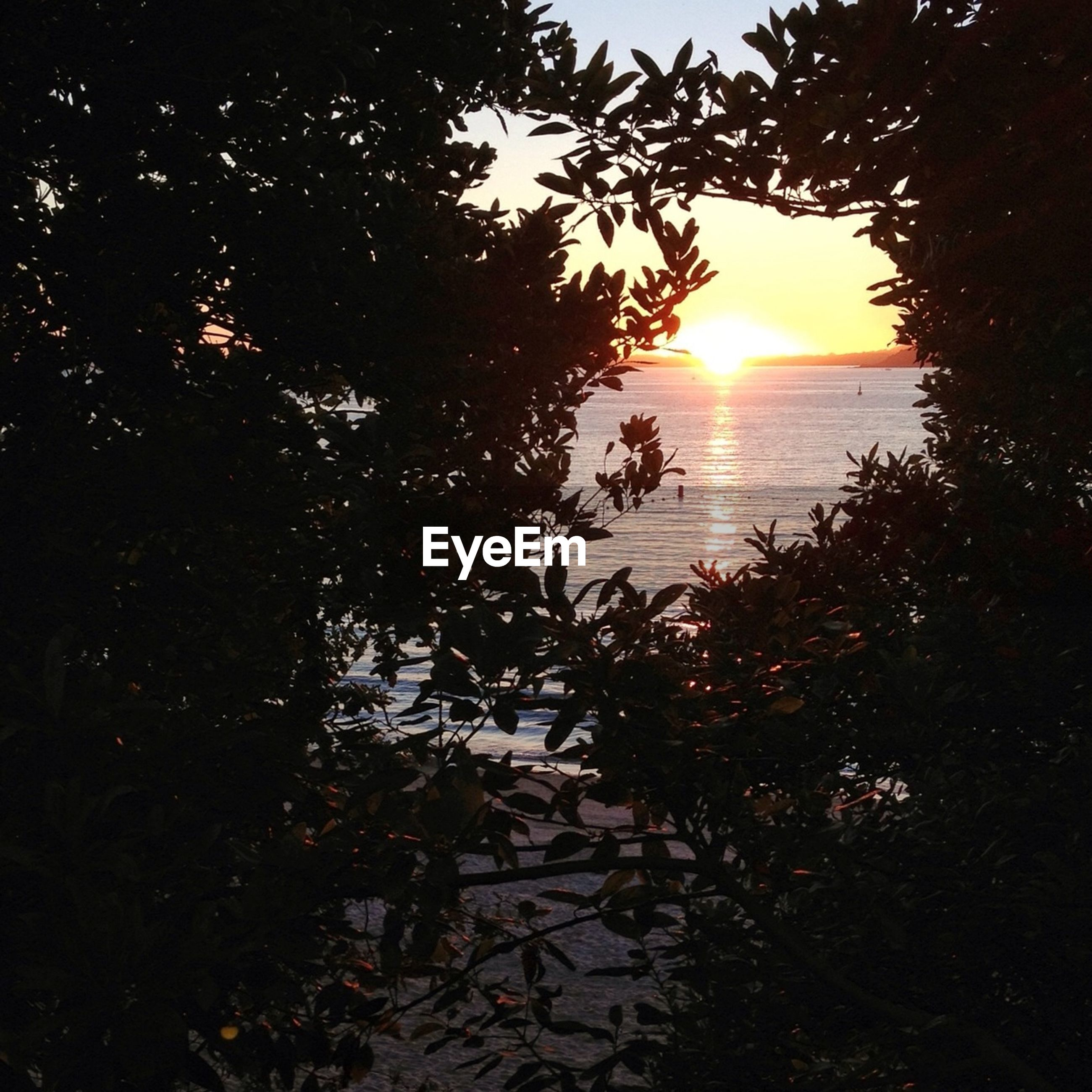 Trees at beach during sunset