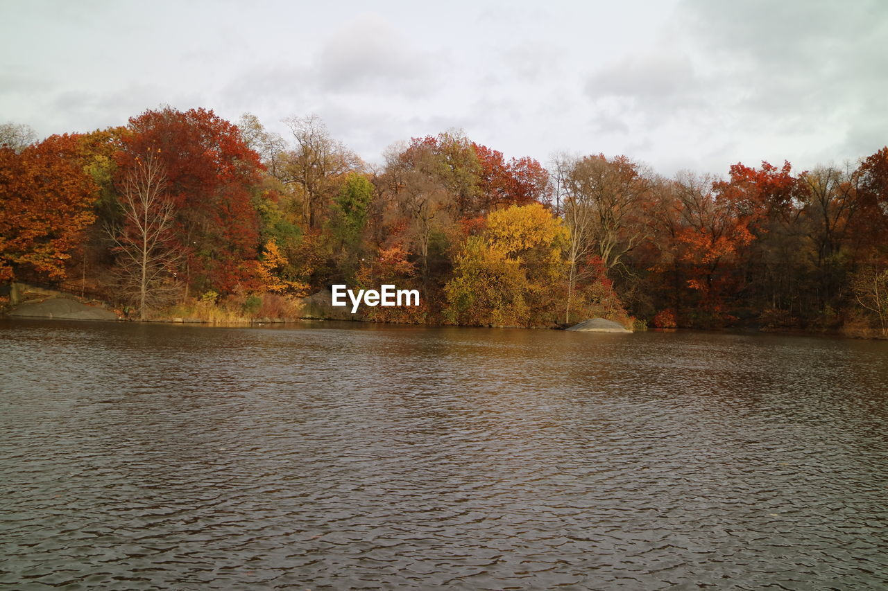 autumn, tree, change, nature, beauty in nature, tranquility, tranquil scene, water, scenics, no people, lake, leaf, outdoors, sky, day, waterfront, cloud - sky, growth