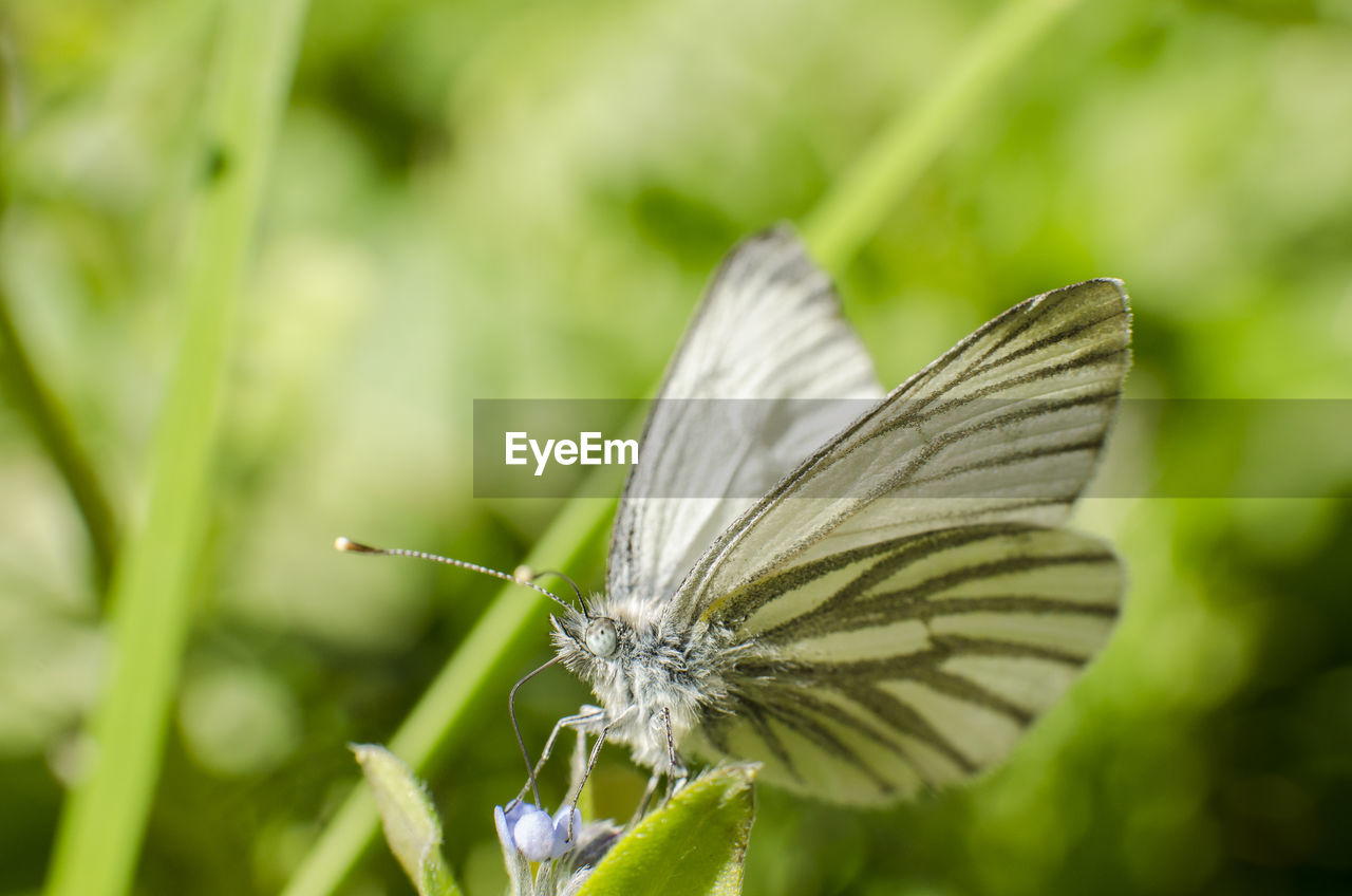 invertebrate, insect, animal wildlife, animal themes, one animal, animal, animals in the wild, animal wing, beauty in nature, plant, flower, close-up, butterfly - insect, focus on foreground, growth, green color, no people, fragility, day, nature, butterfly, flower head, pollination