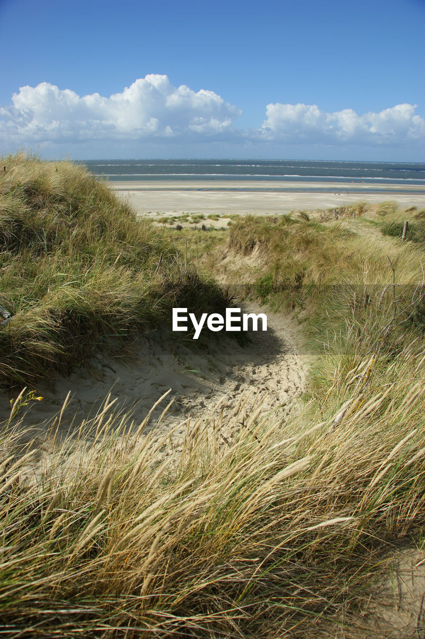 plant, sky, land, water, grass, beauty in nature, beach, sea, cloud - sky, scenics - nature, nature, tranquility, growth, tranquil scene, day, horizon, environment, no people, horizon over water, outdoors, marram grass, wind, timothy grass