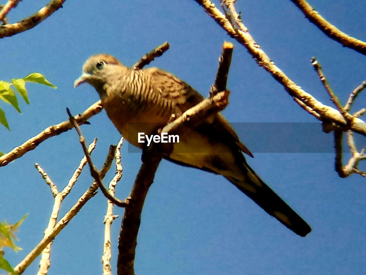 bird, animal, animal themes, animal wildlife, vertebrate, animals in the wild, one animal, perching, branch, low angle view, tree, plant, sky, nature, no people, day, clear sky, focus on foreground, outdoors