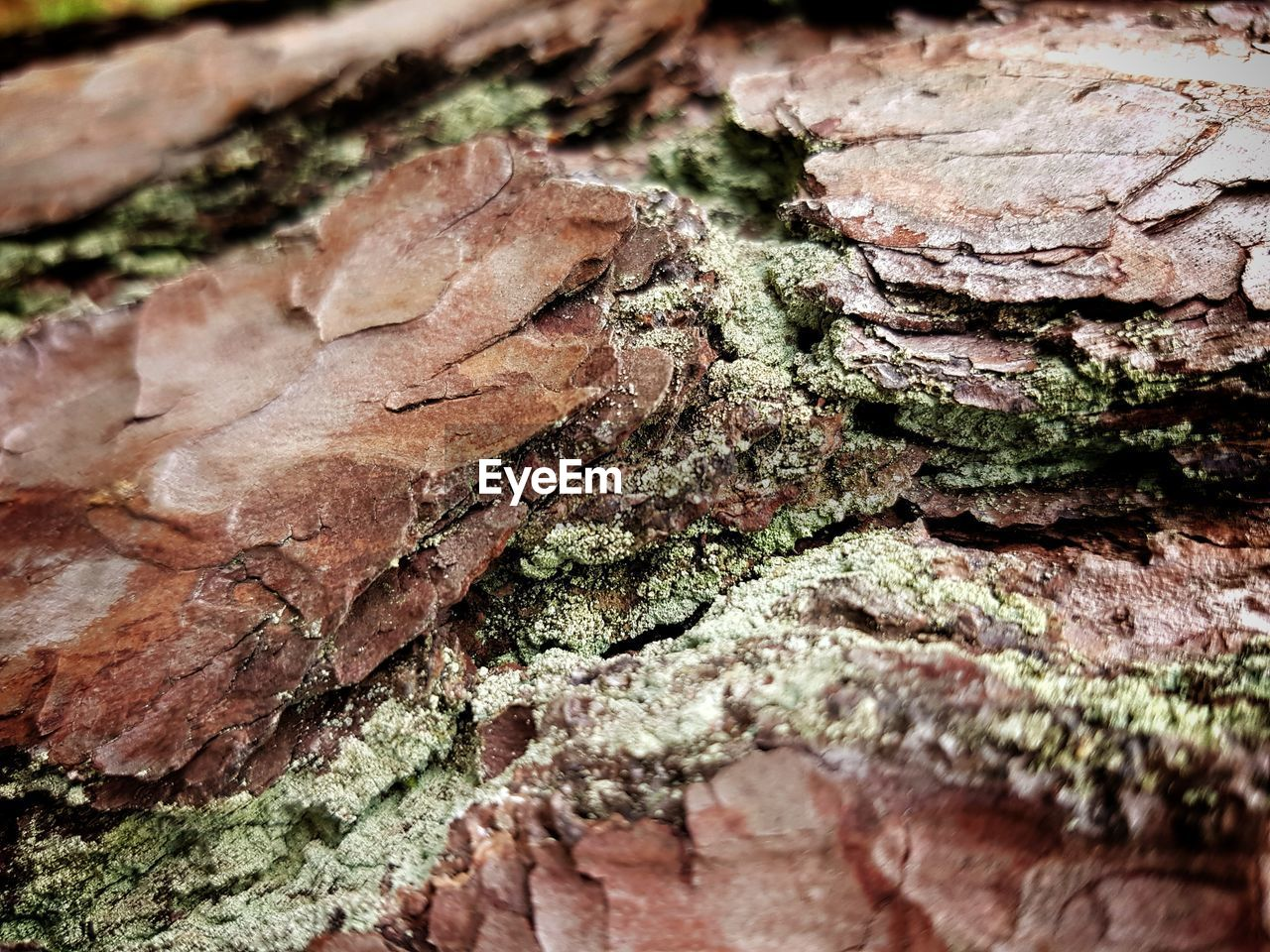 close-up, selective focus, textured, rough, no people, tree trunk, trunk, backgrounds, tree, full frame, plant, day, moss, outdoors, wood - material, nature, food, focus on foreground, bark, growth, lichen
