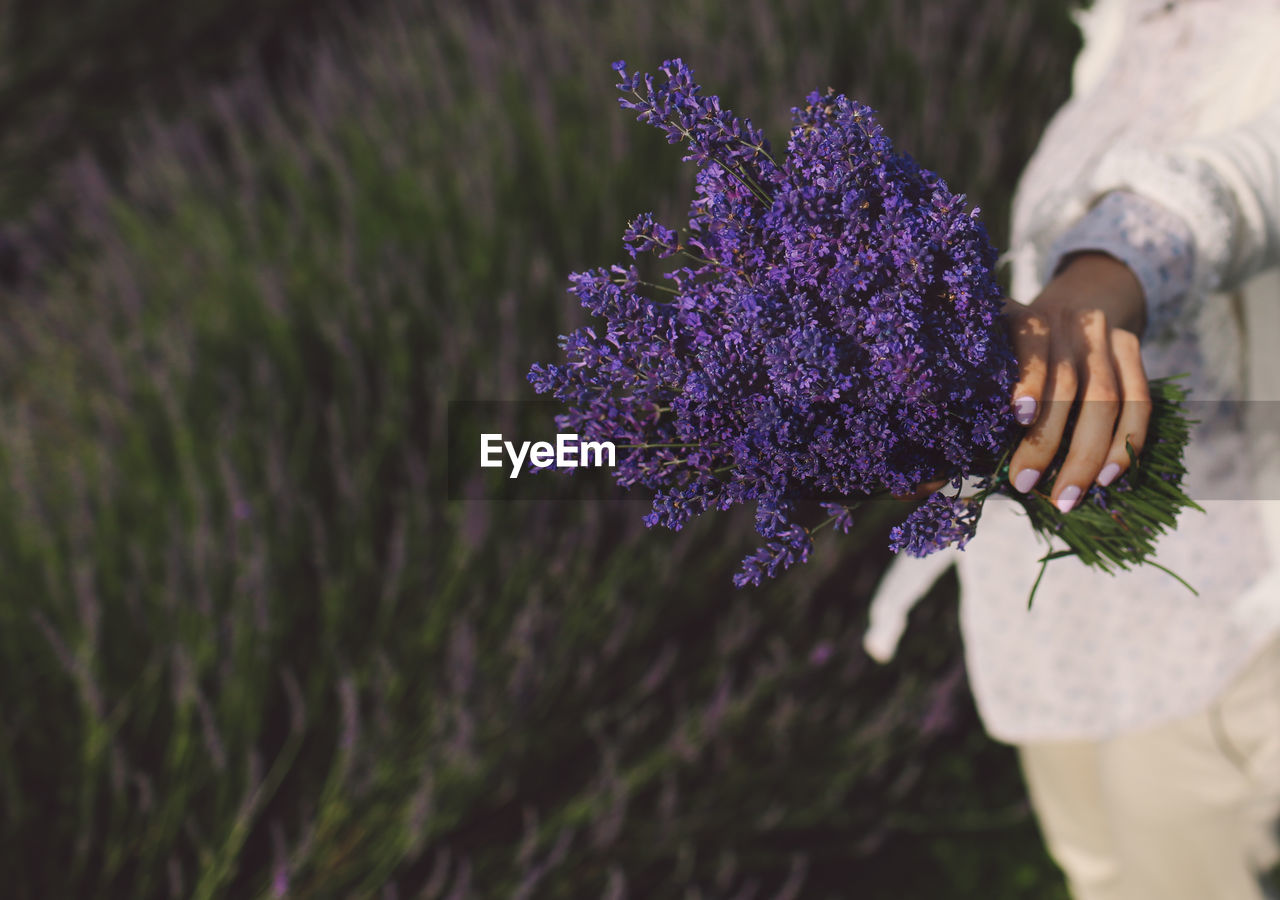 Midsection Of Woman Holding Lavender Bouquet On Field