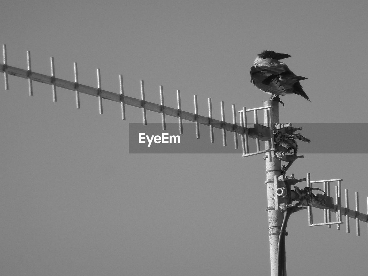 HIGH ANGLE VIEW OF BIRD PERCHING ON POLE