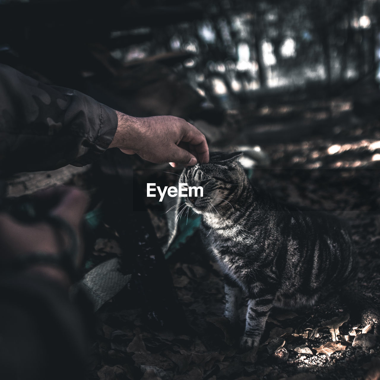 Cropped Hand Petting Tabby In Park