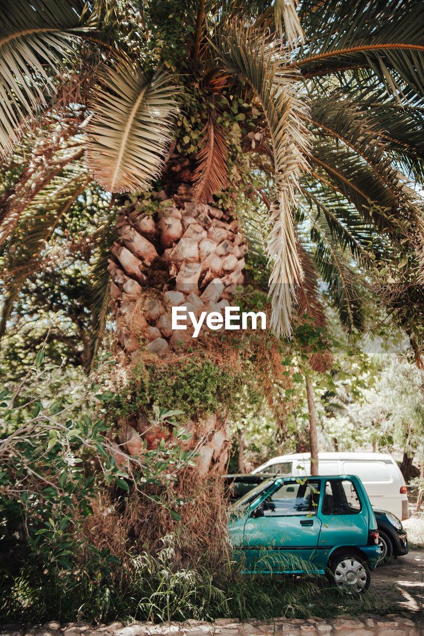 Palm tree at park