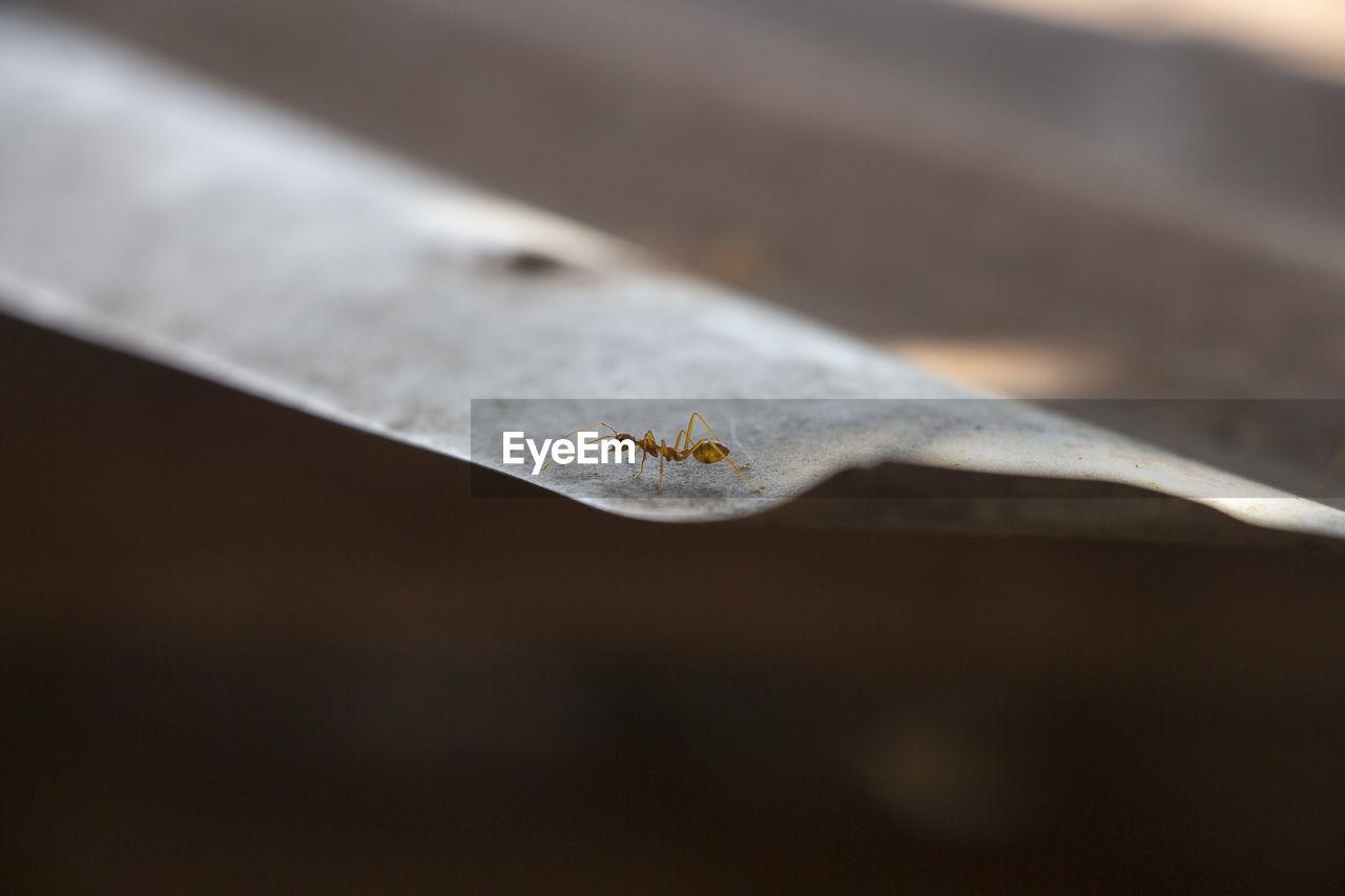Extreme Close-Up Of Ant On Corrugated Iron