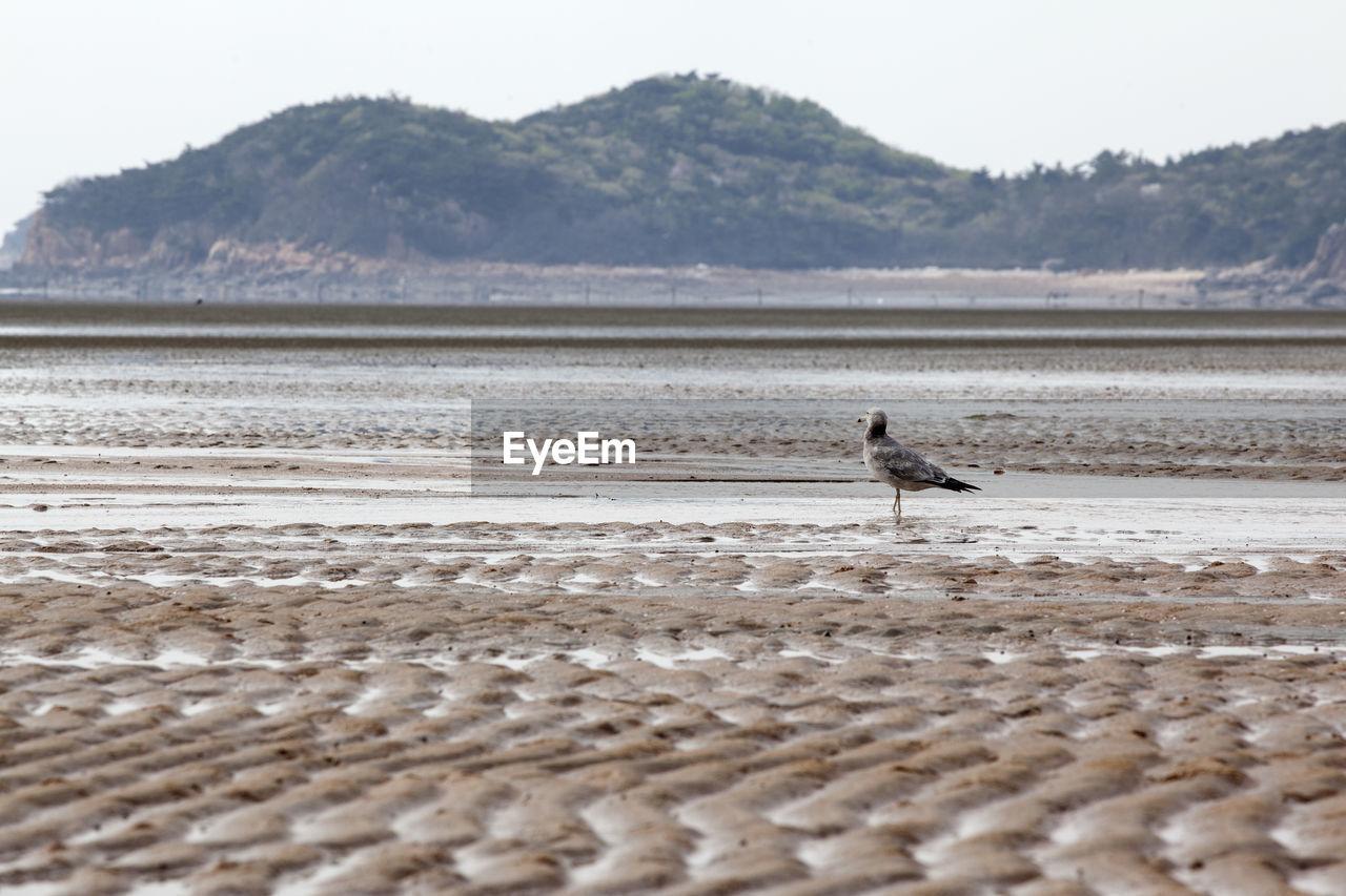 Seagull Perching At Beach Against Mountain
