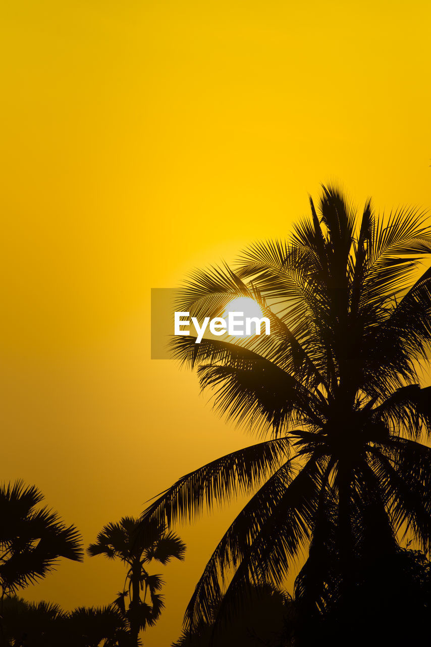 LOW ANGLE VIEW OF SILHOUETTE COCONUT PALM TREE AGAINST ROMANTIC SKY